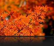 紅葉 素材
