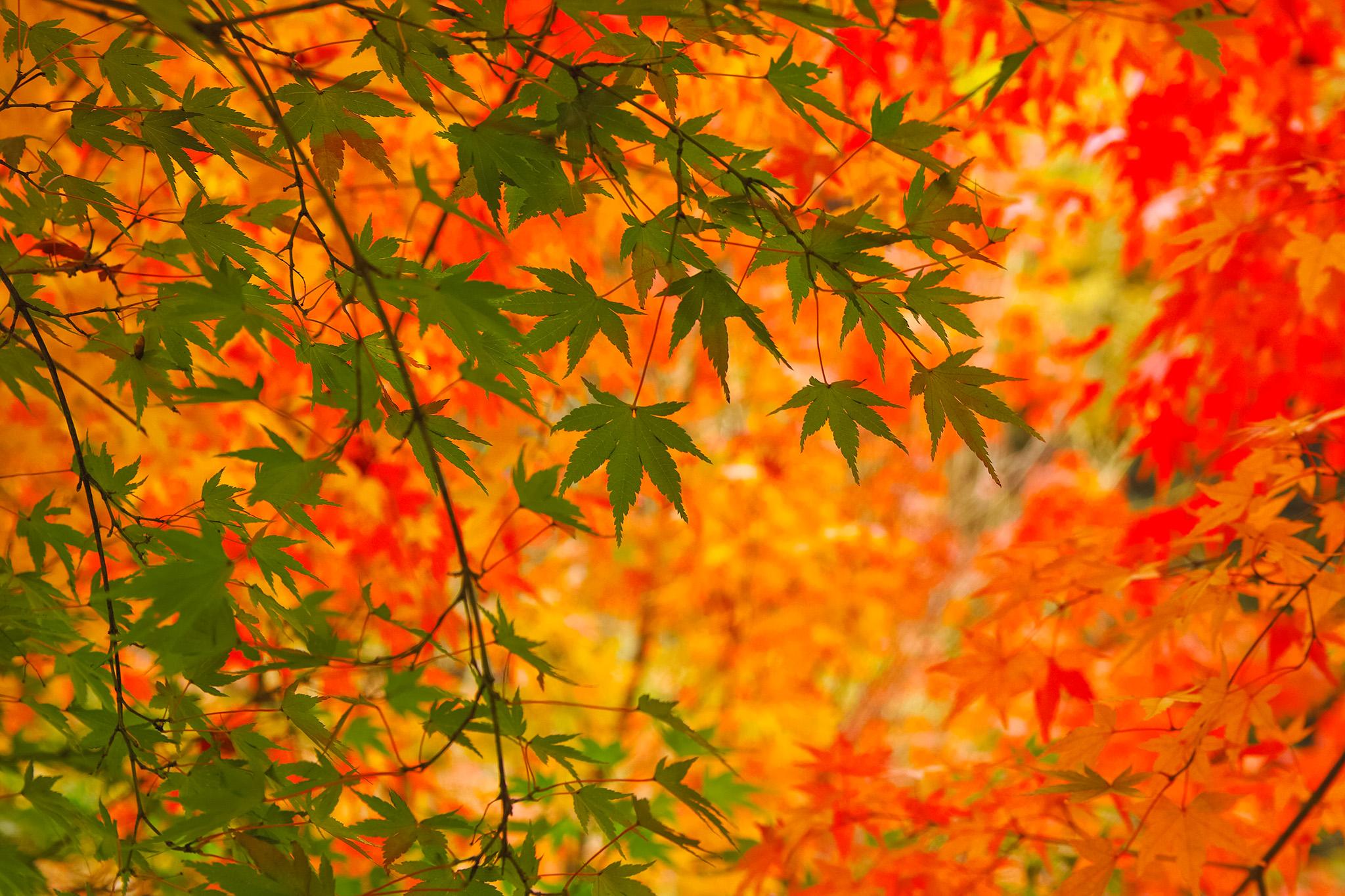 「美しい青葉と紅葉の秋背景」
