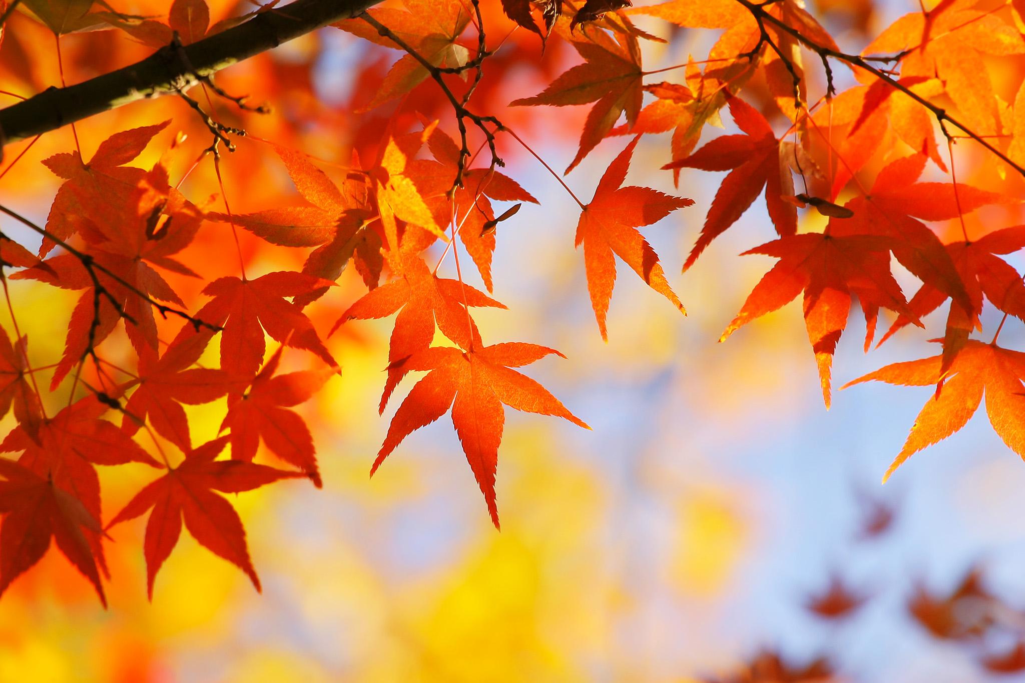 「紅葉と黄葉のコラボレーション」