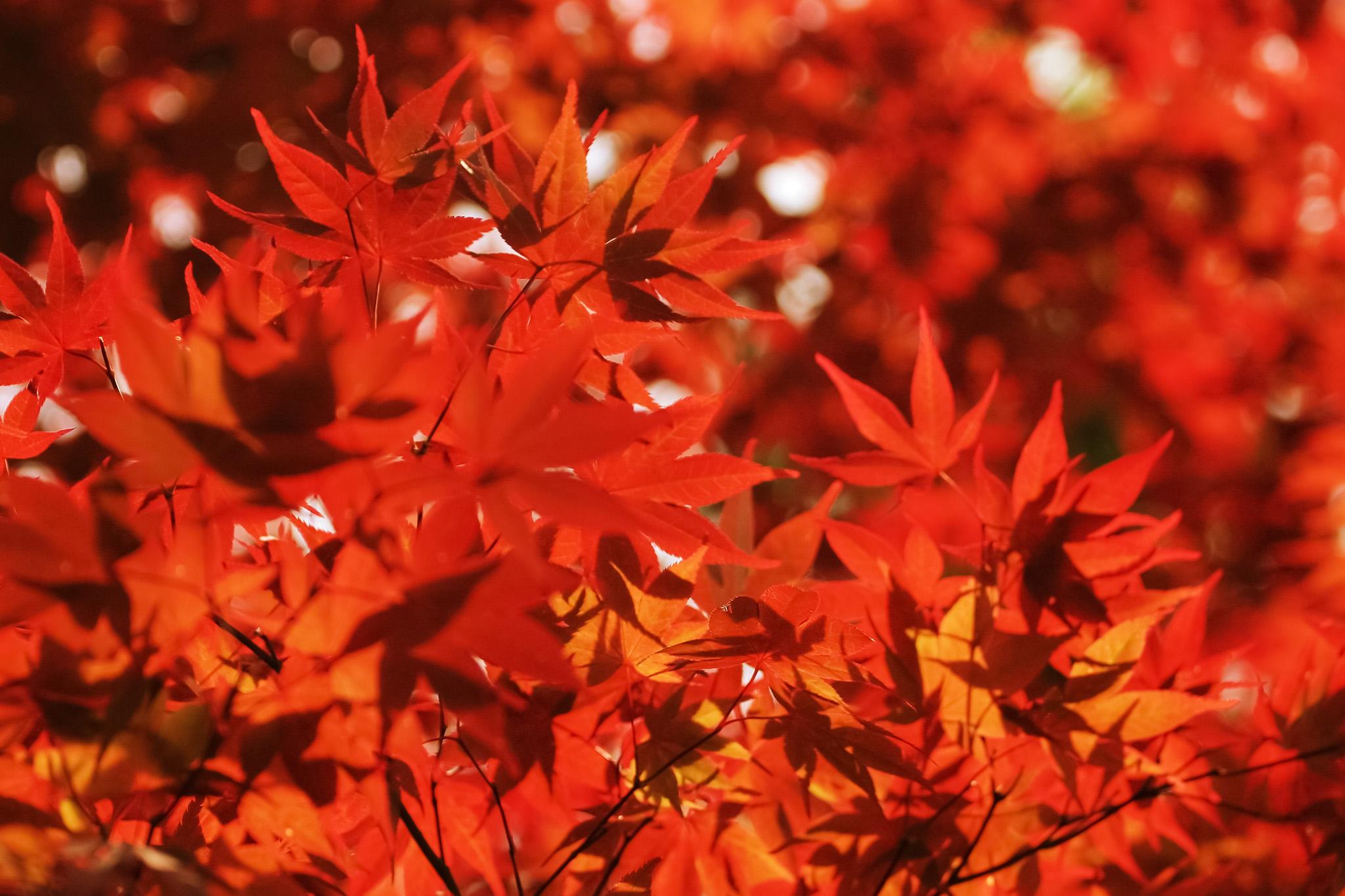 「紅葉が輝く秋の森」
