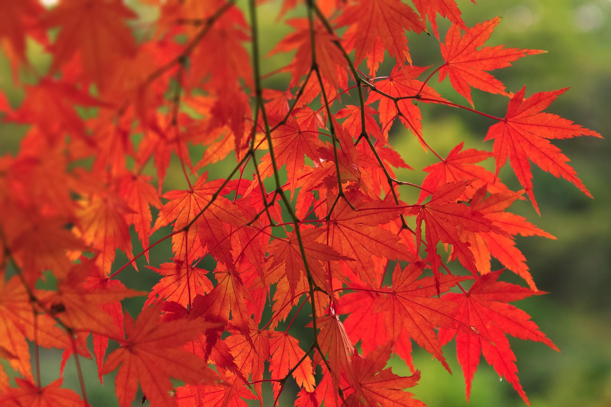 「赤と緑が美しい初秋の林」