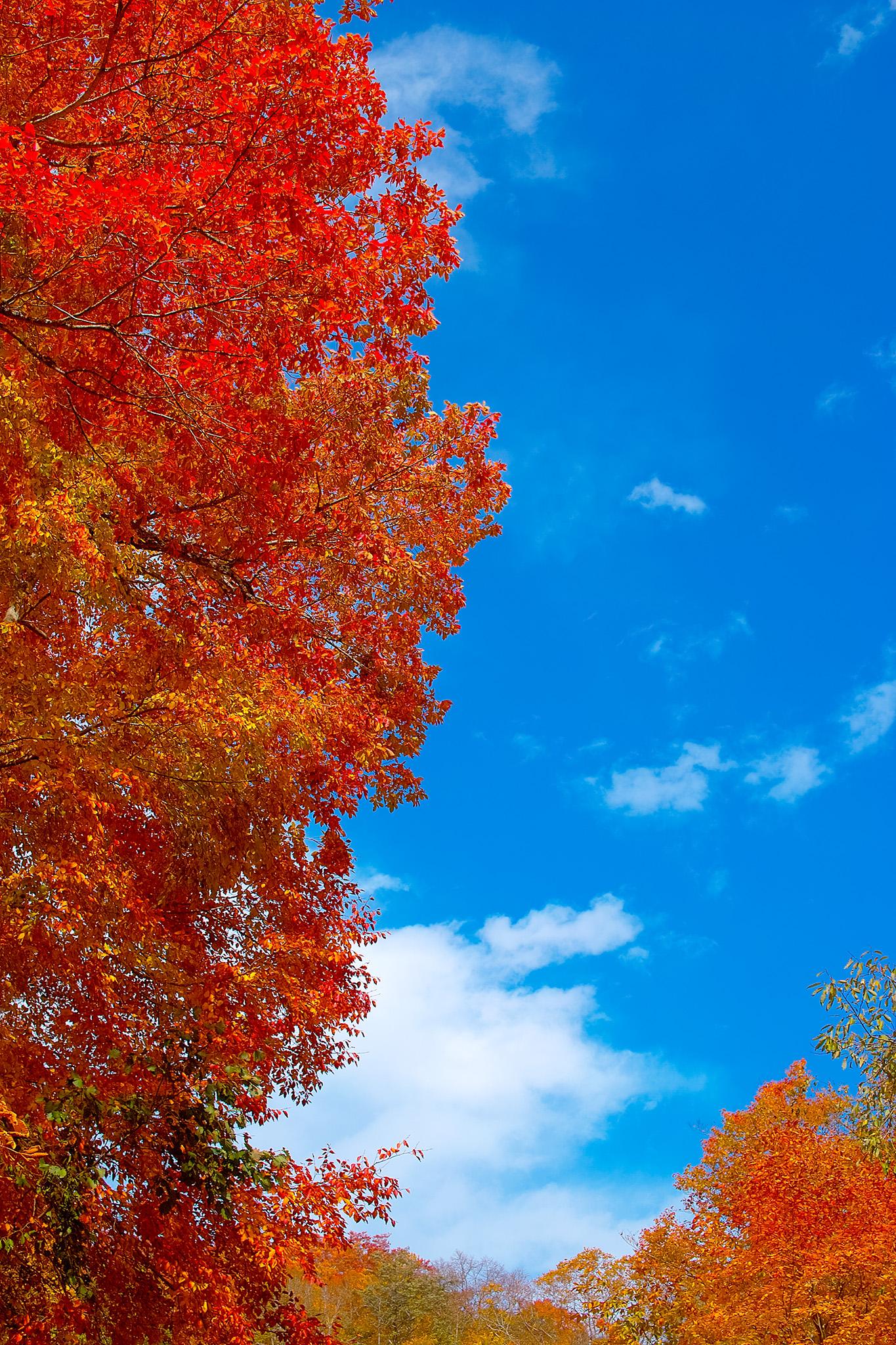 「秋の青空と紅葉の背景」