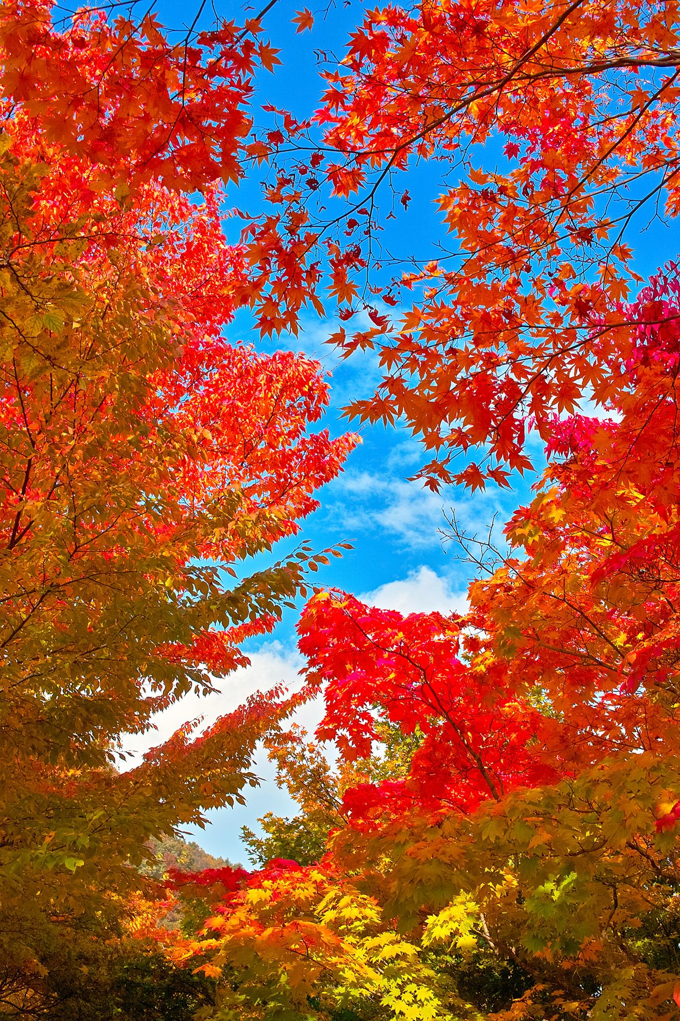 「色彩豊かな秋の背景」