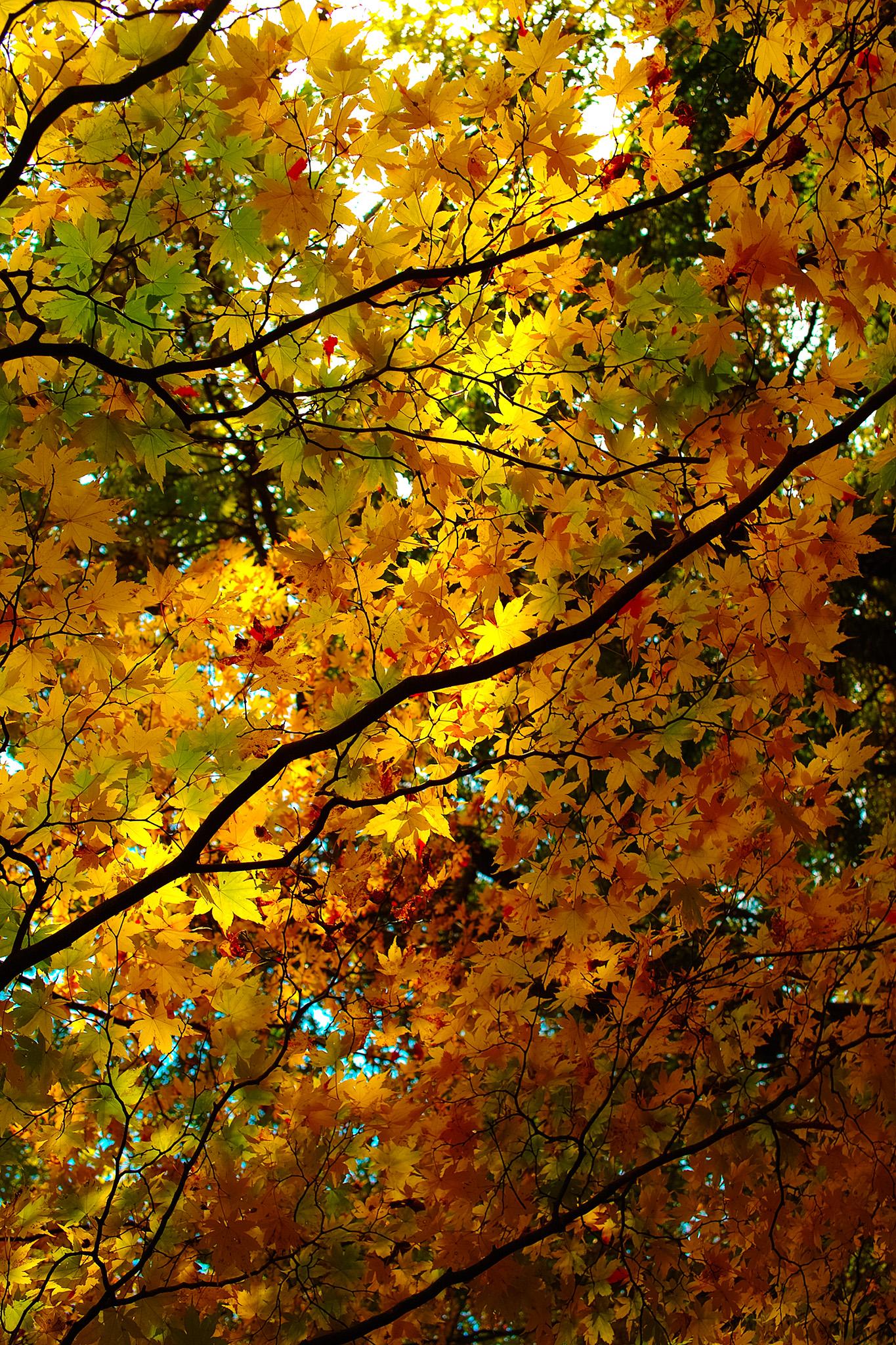 「黄葉を照らす初秋の陽射し」