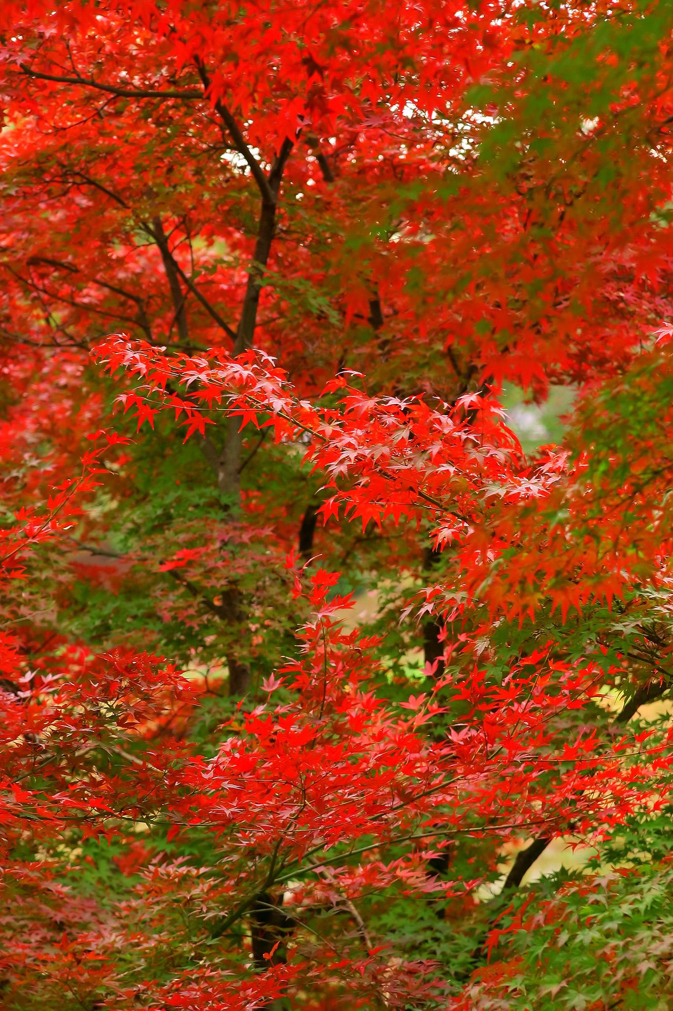 「紅葉と青葉のコラボレーション」の画像を無料ダウンロード