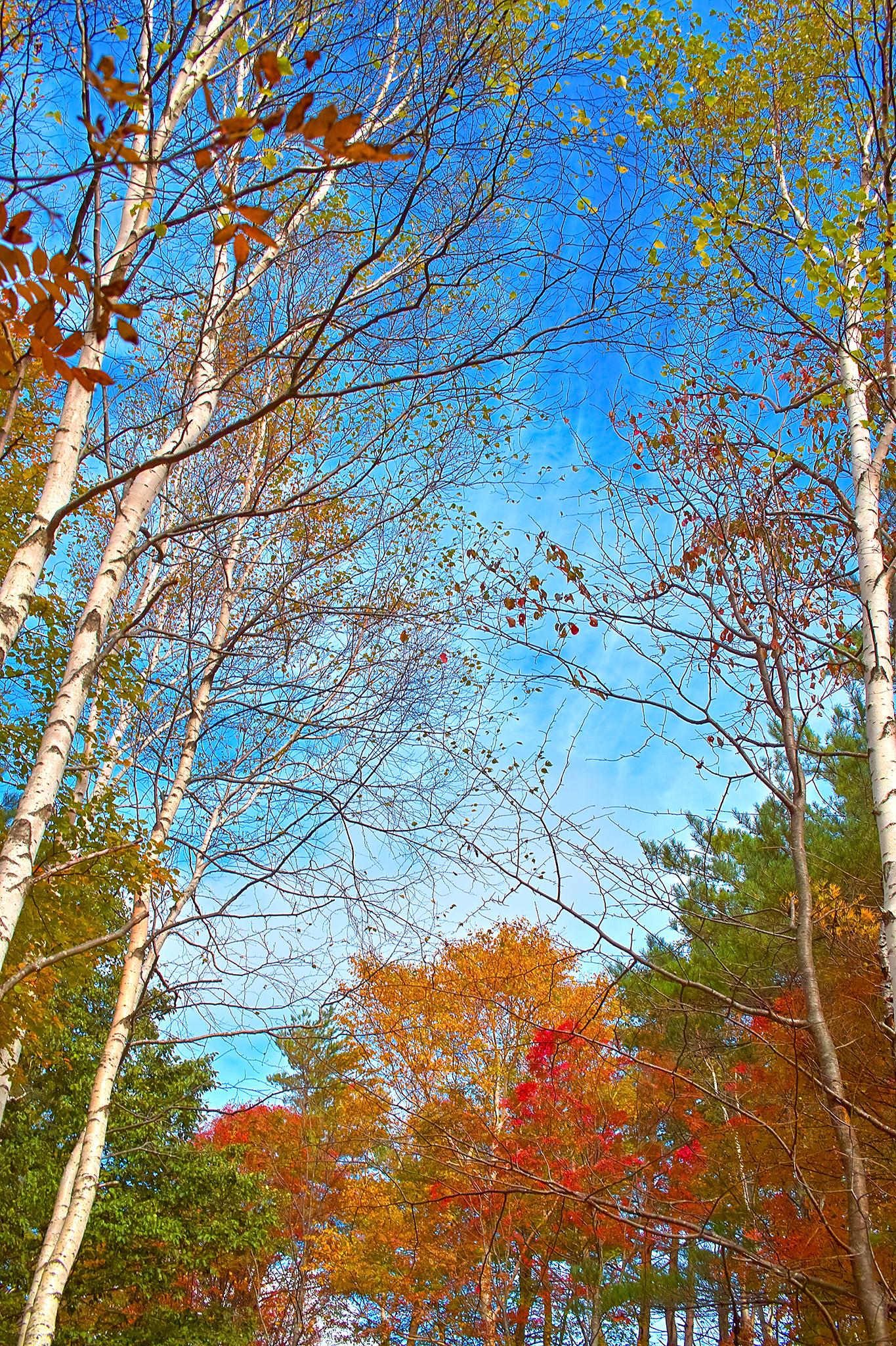 「清々しい青空と秋の森」の画像を無料ダウンロード