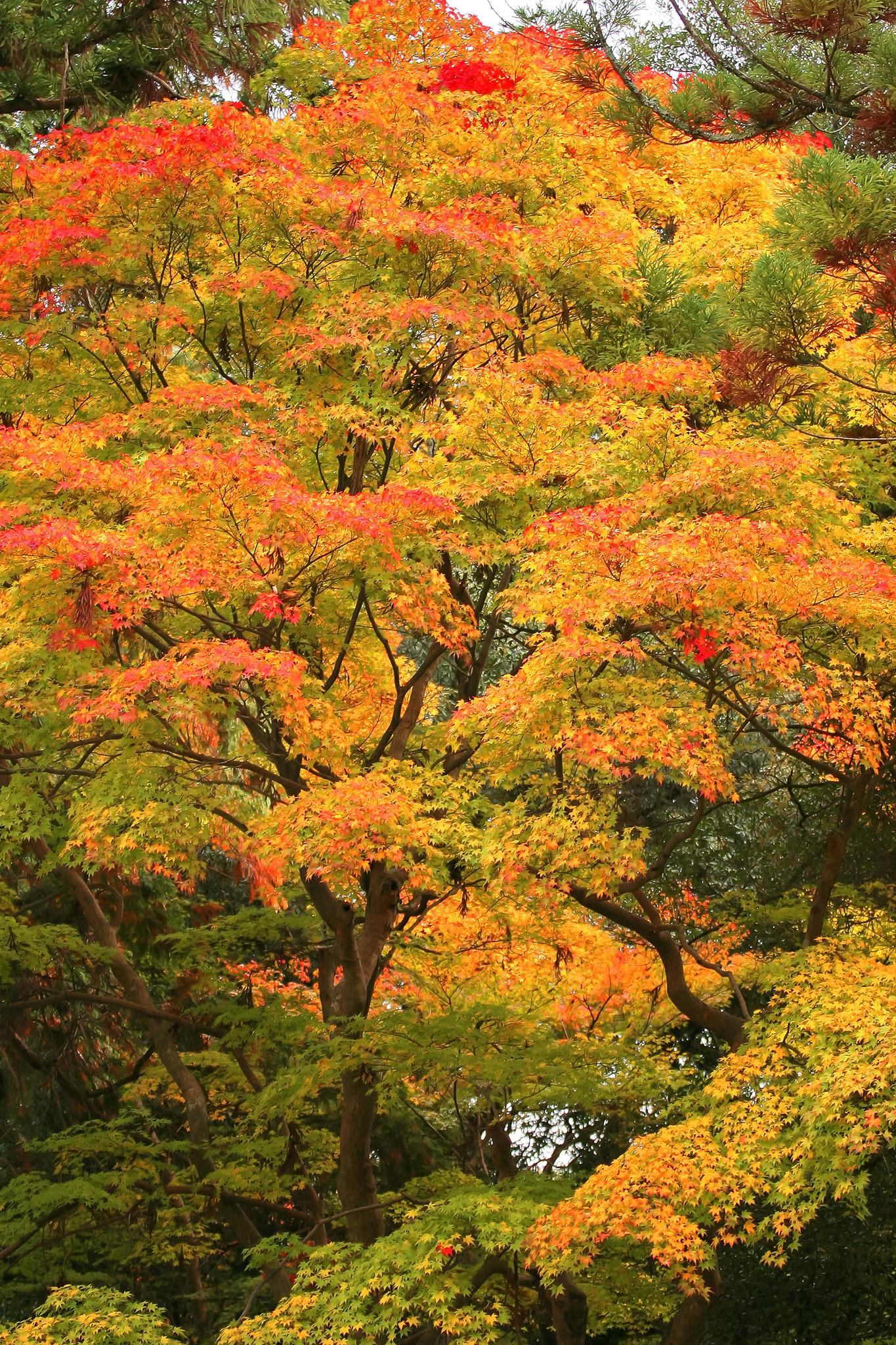 「色づき始める秋の訪れ」の画像を無料ダウンロード