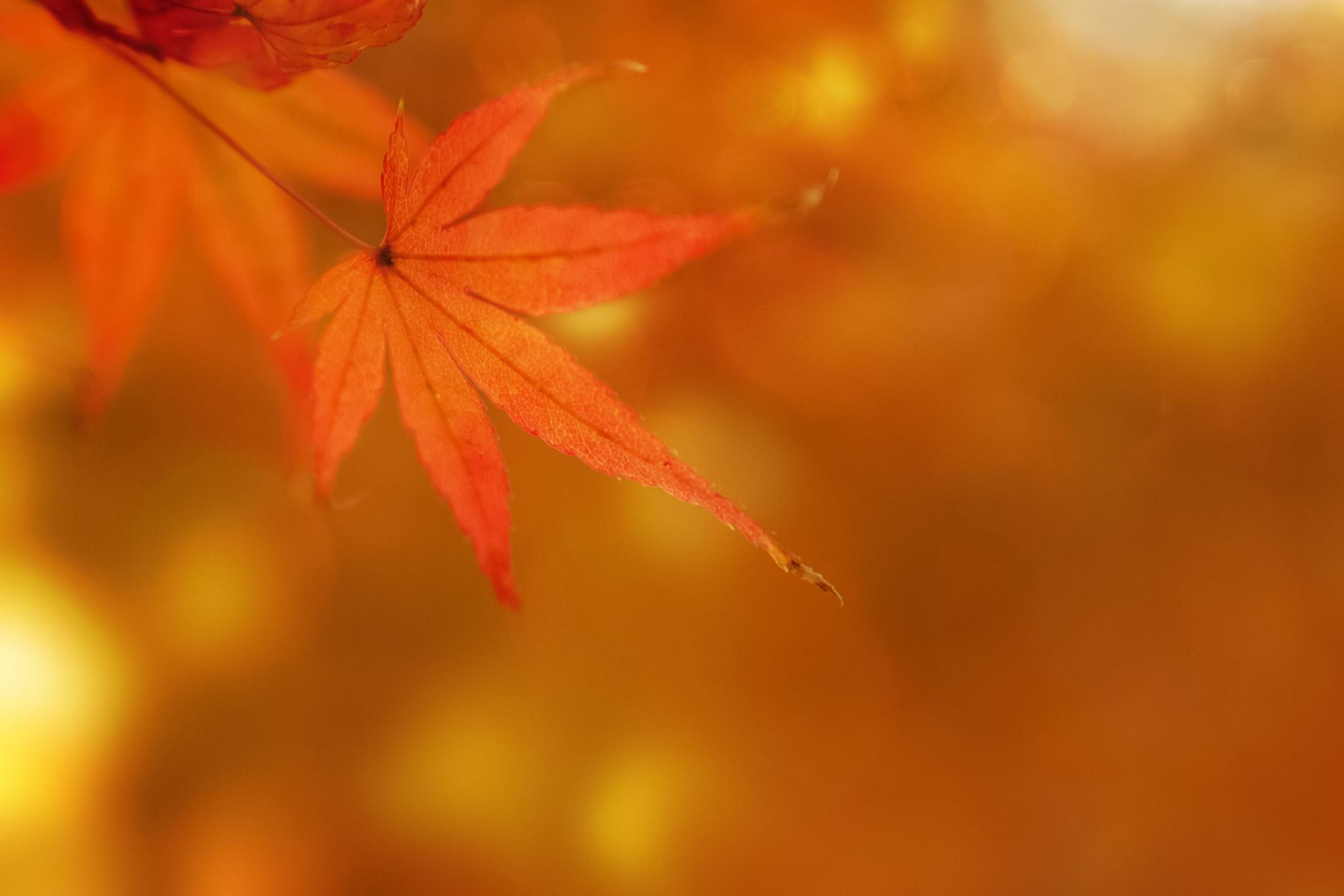「秋の紅葉」