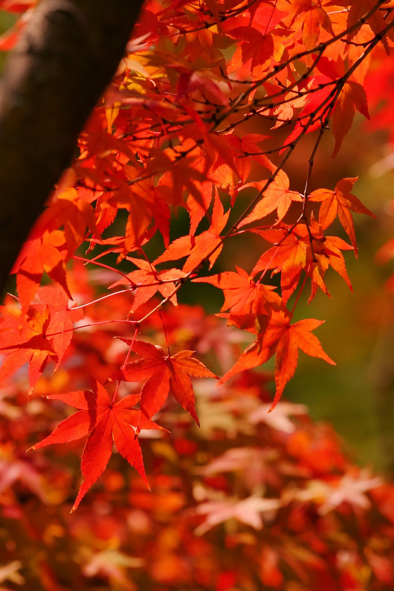 「美しい紅葉」
