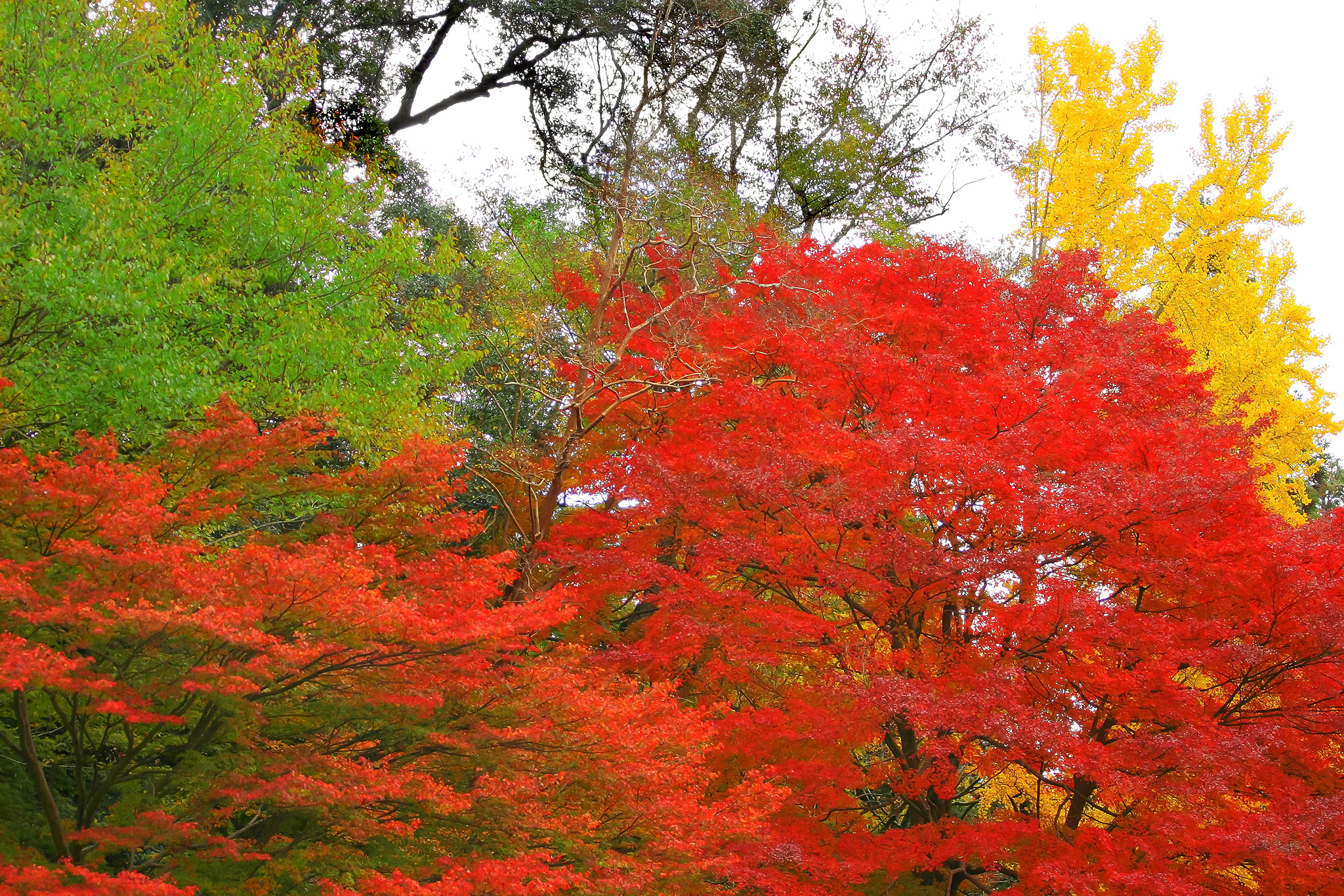 「綺麗な紅葉」