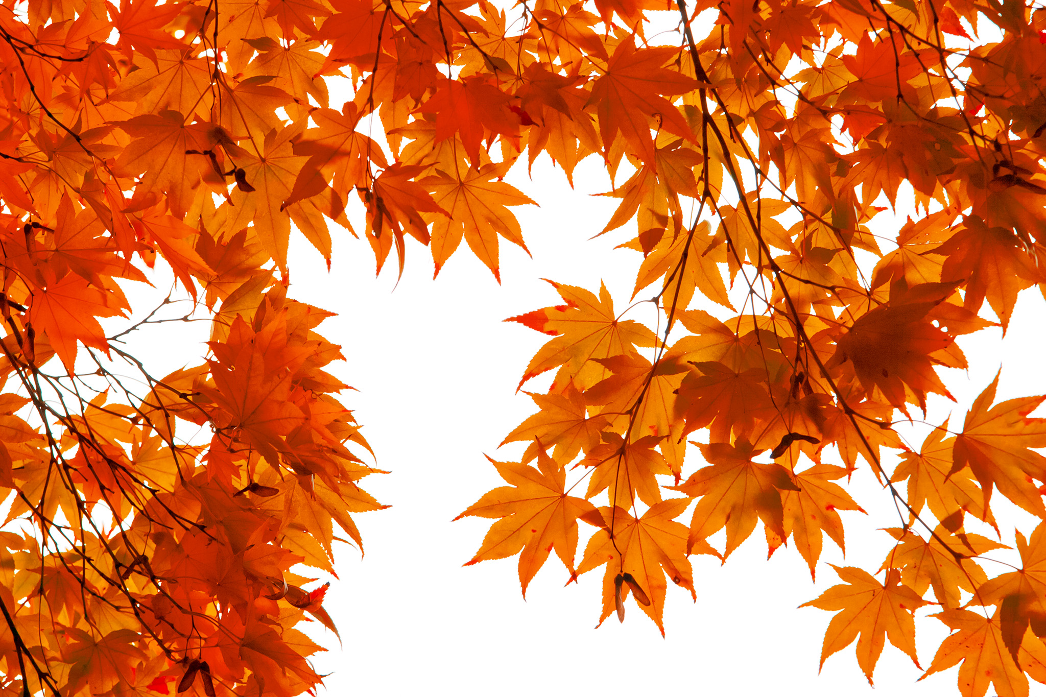 「紅葉風景」