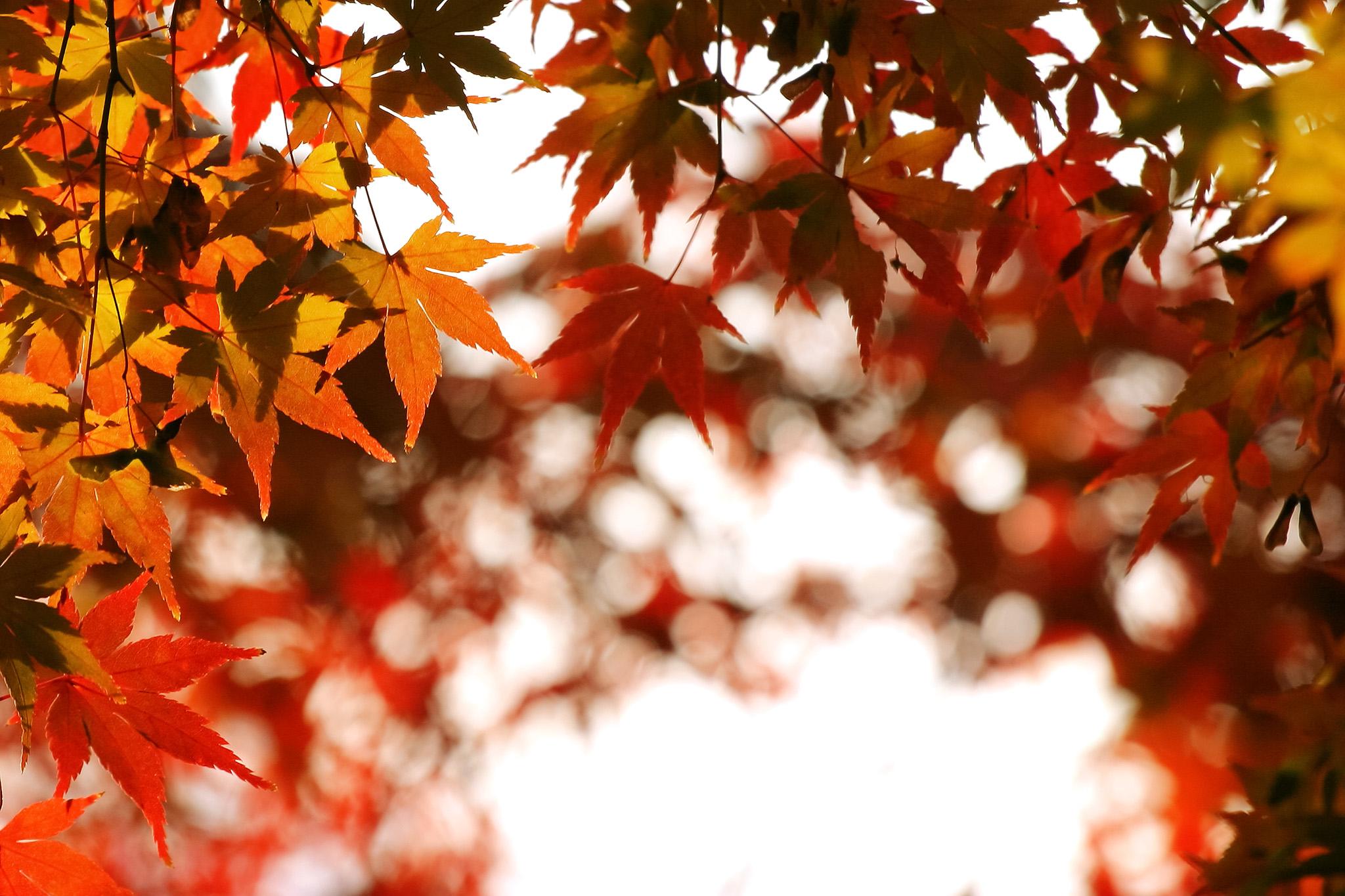 「紅葉風景」のテクスチャを無料ダウンロード