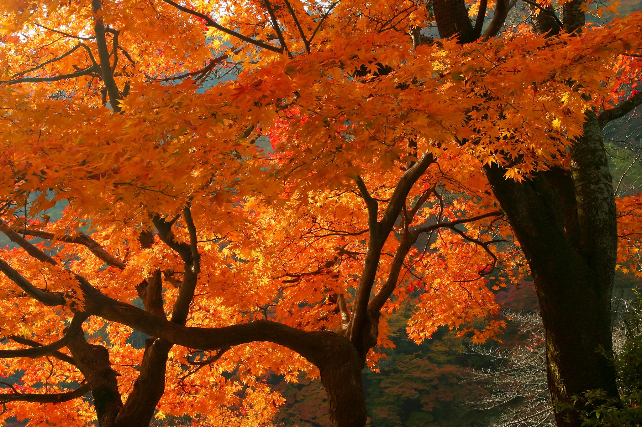 「紅葉の景色」