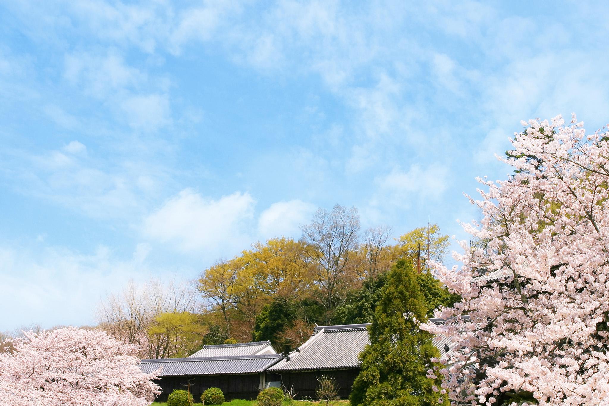 桜咲く里山の春