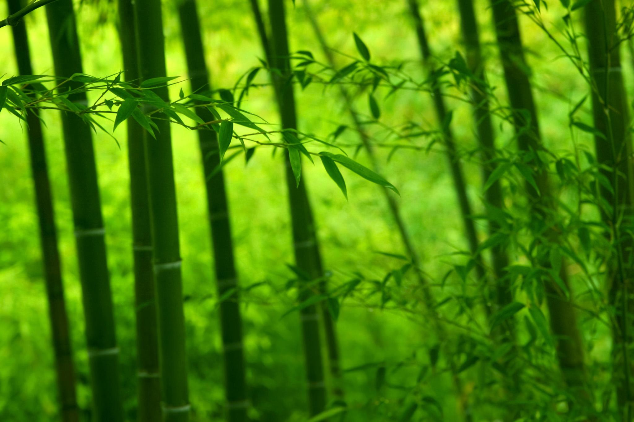 「緑に光る竹林の景色」
