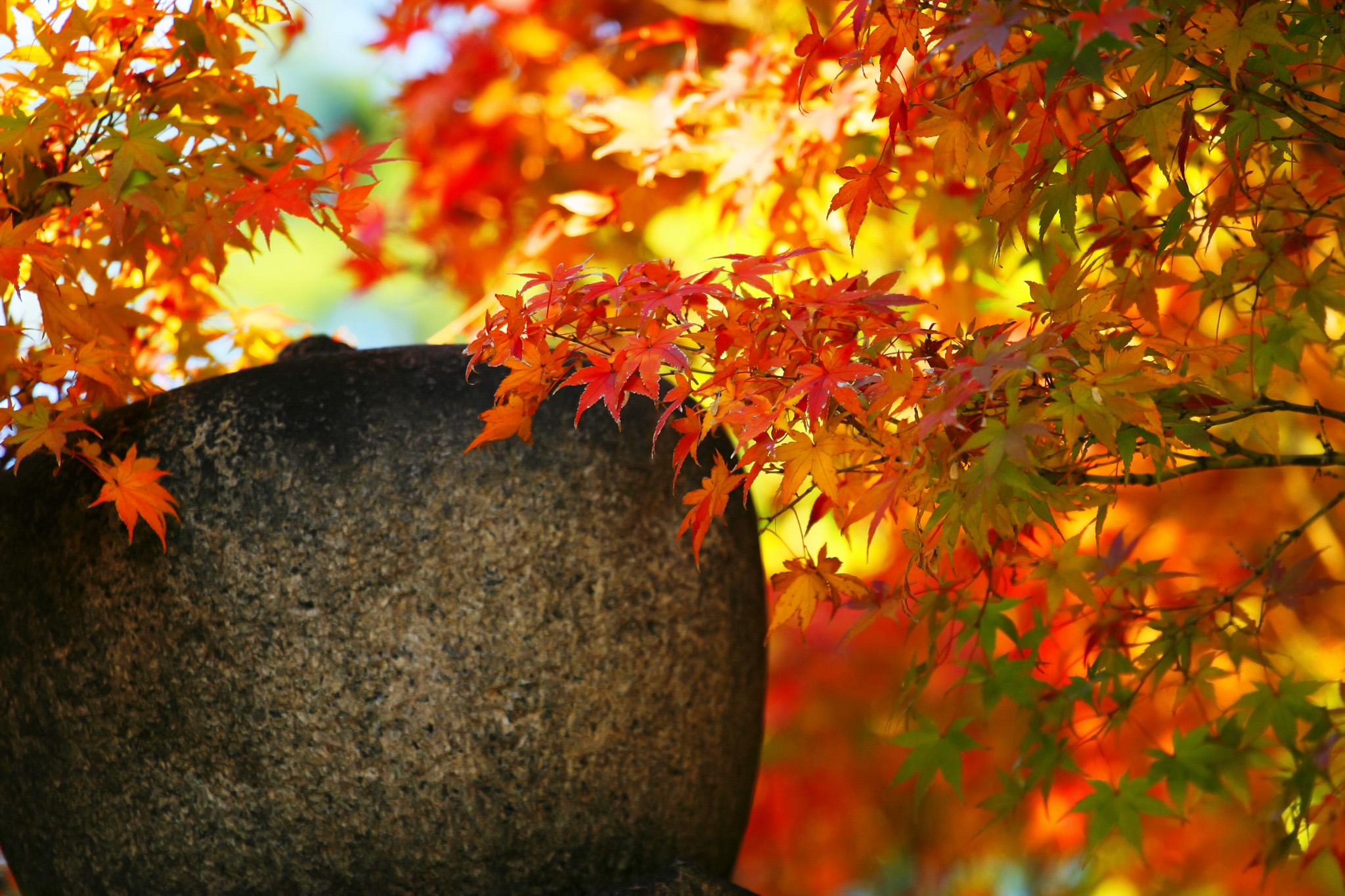 秋の紅葉の日本庭園