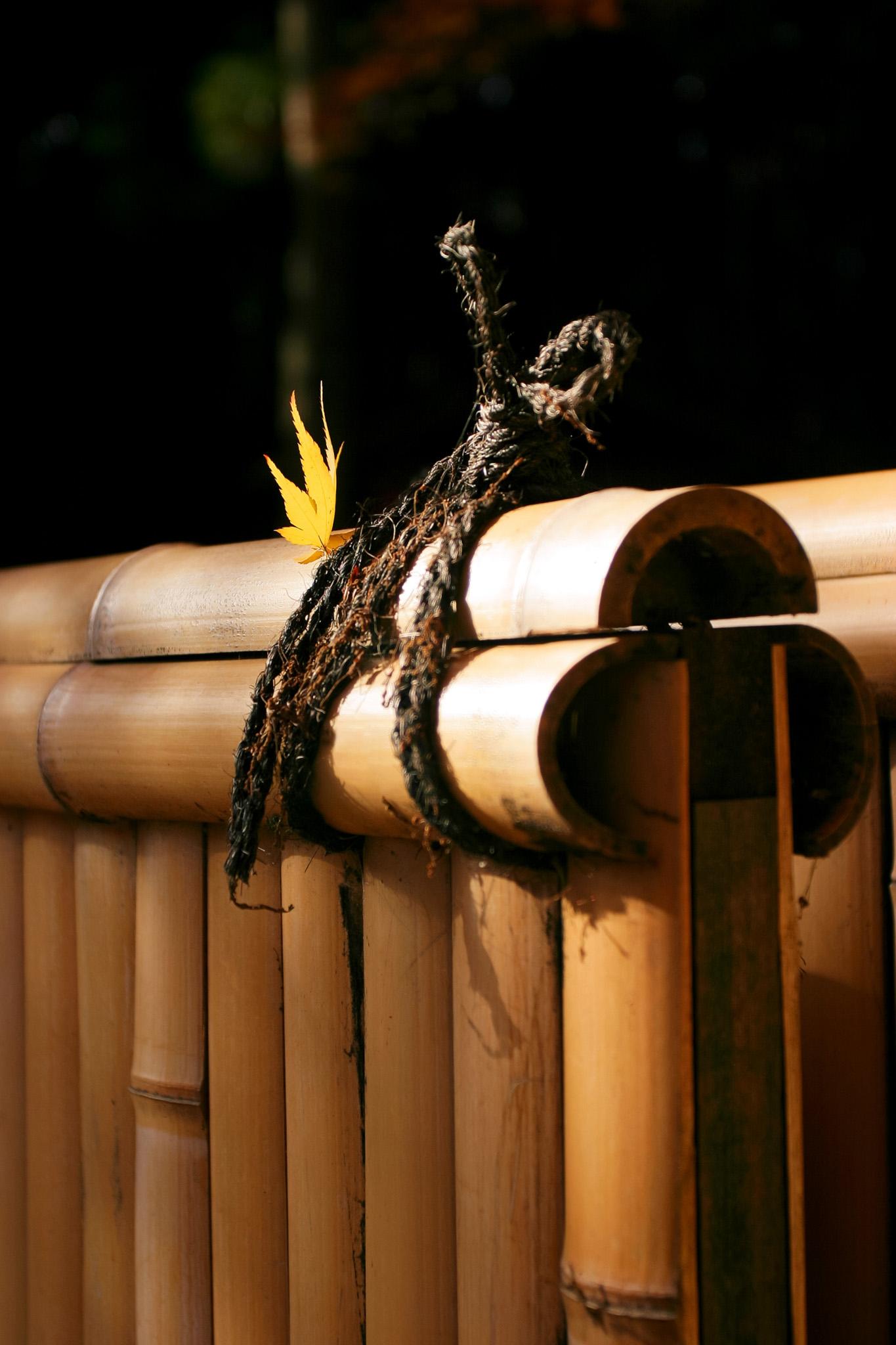 「竹垣と黄葉したモミジの葉」