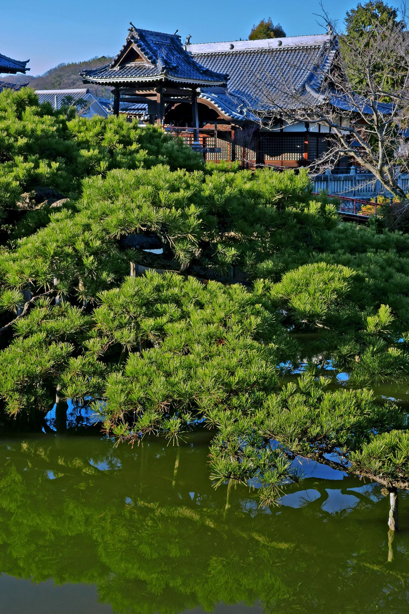 「池と松と日本寺院」のテクスチャを無料ダウンロード