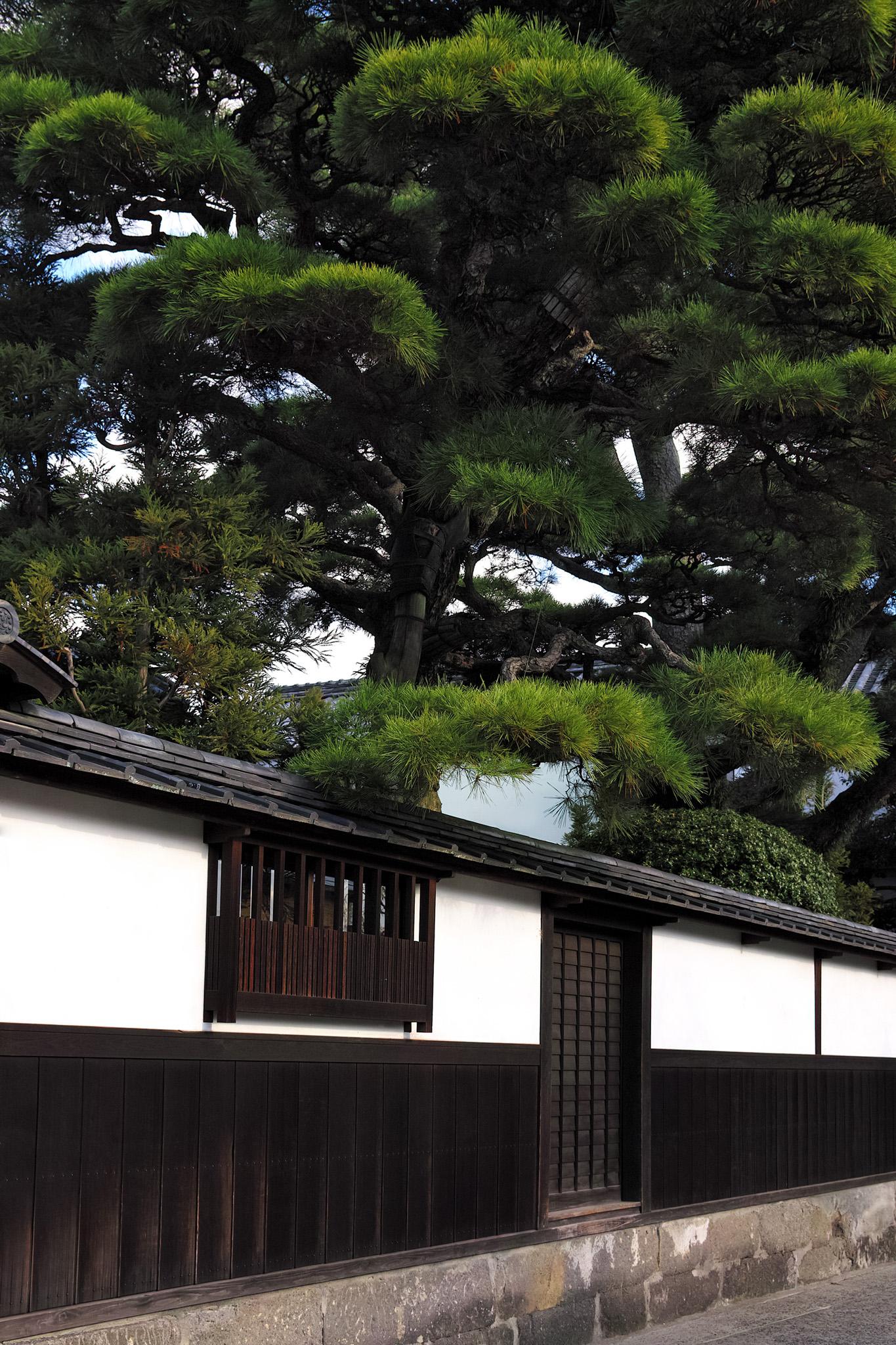 「大きな松のある白壁の屋敷」の素材を無料ダウンロード