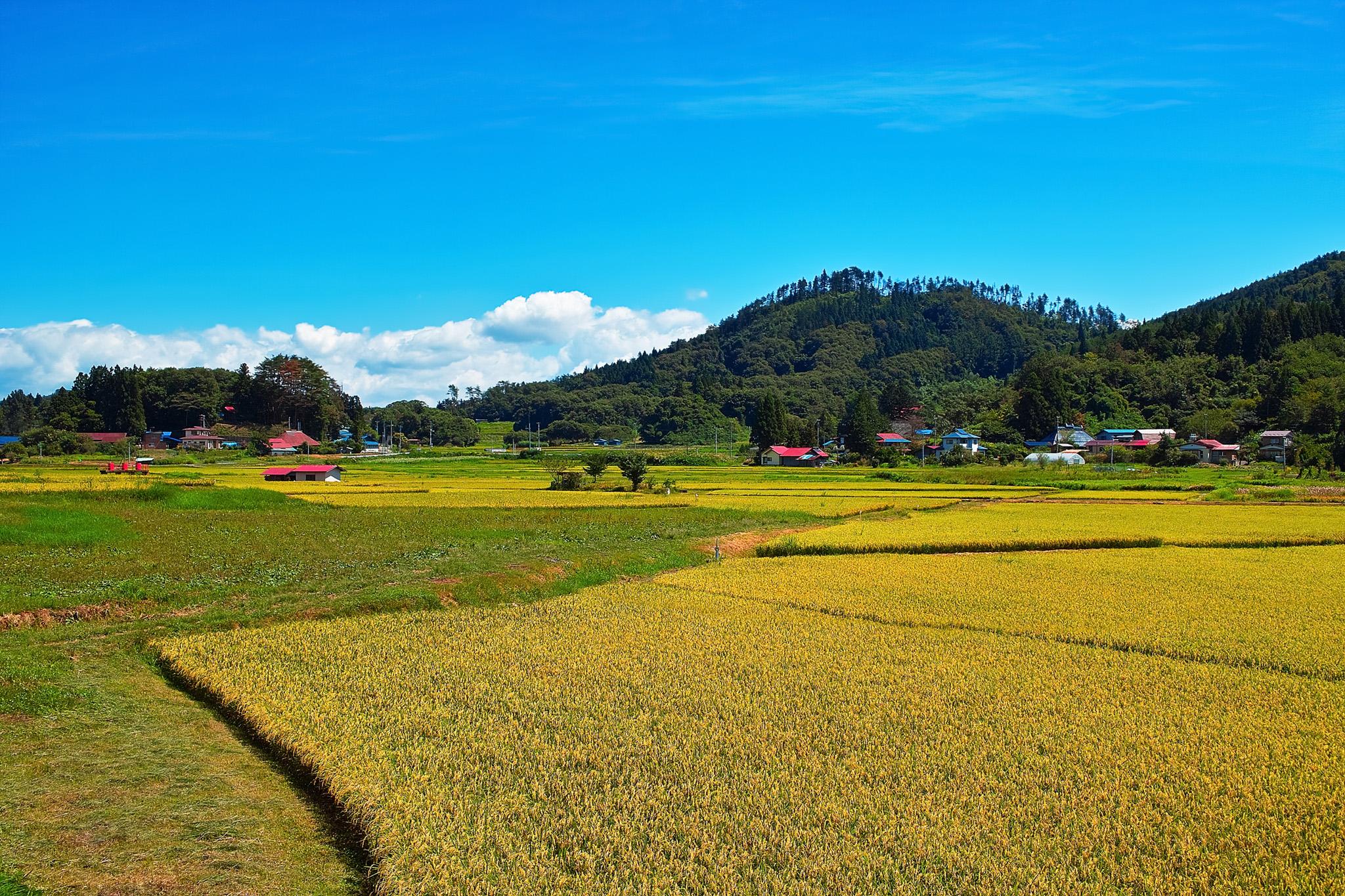 「稲刈り前の豊かな田園風景」