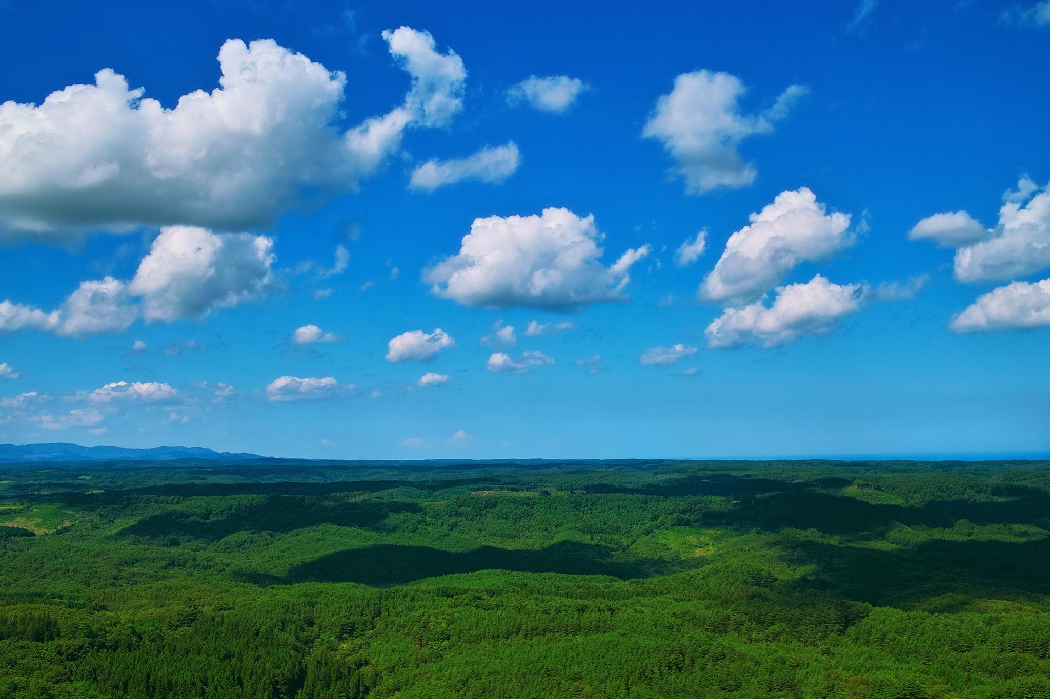 「広大な森と青空の風景」の画像を無料ダウンロード