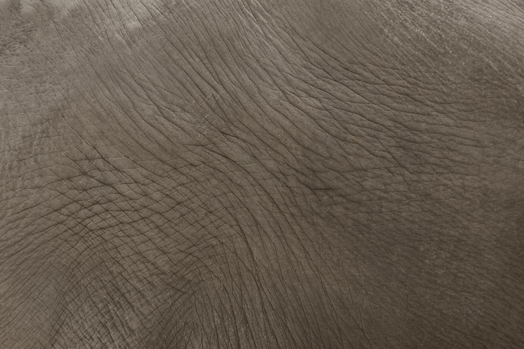 シワの入った象の表皮