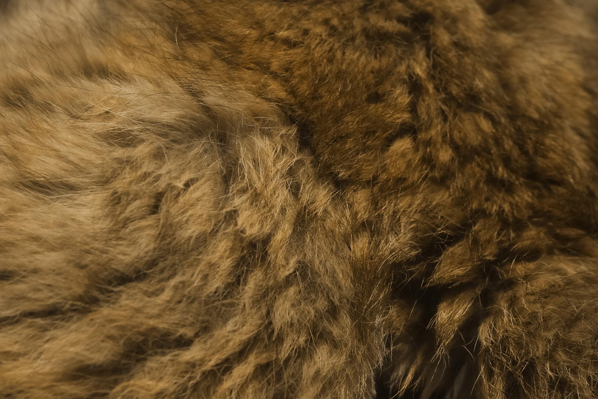 茶色い動物の毛皮