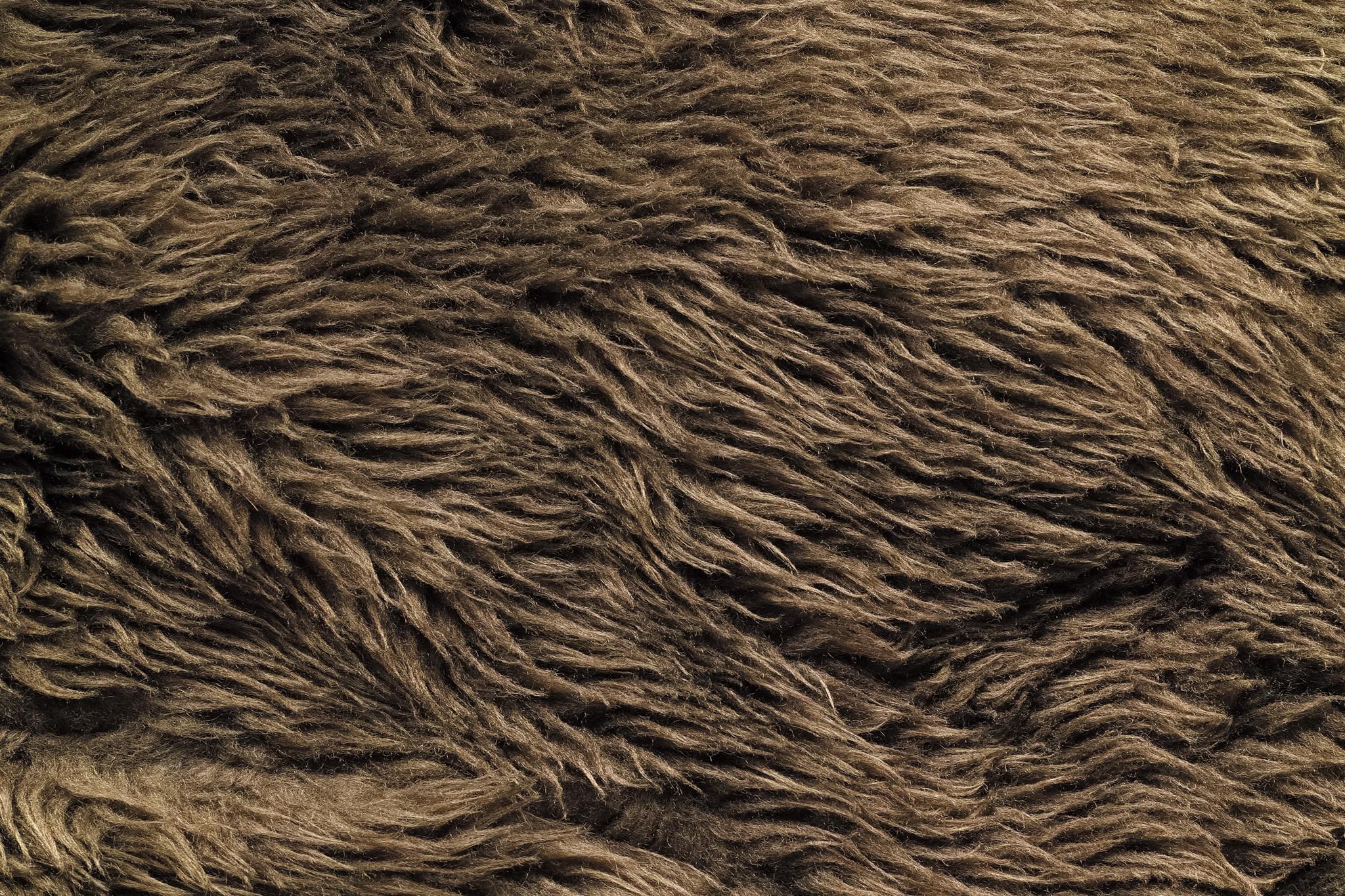 乾燥した毛のゴワゴワとした質感