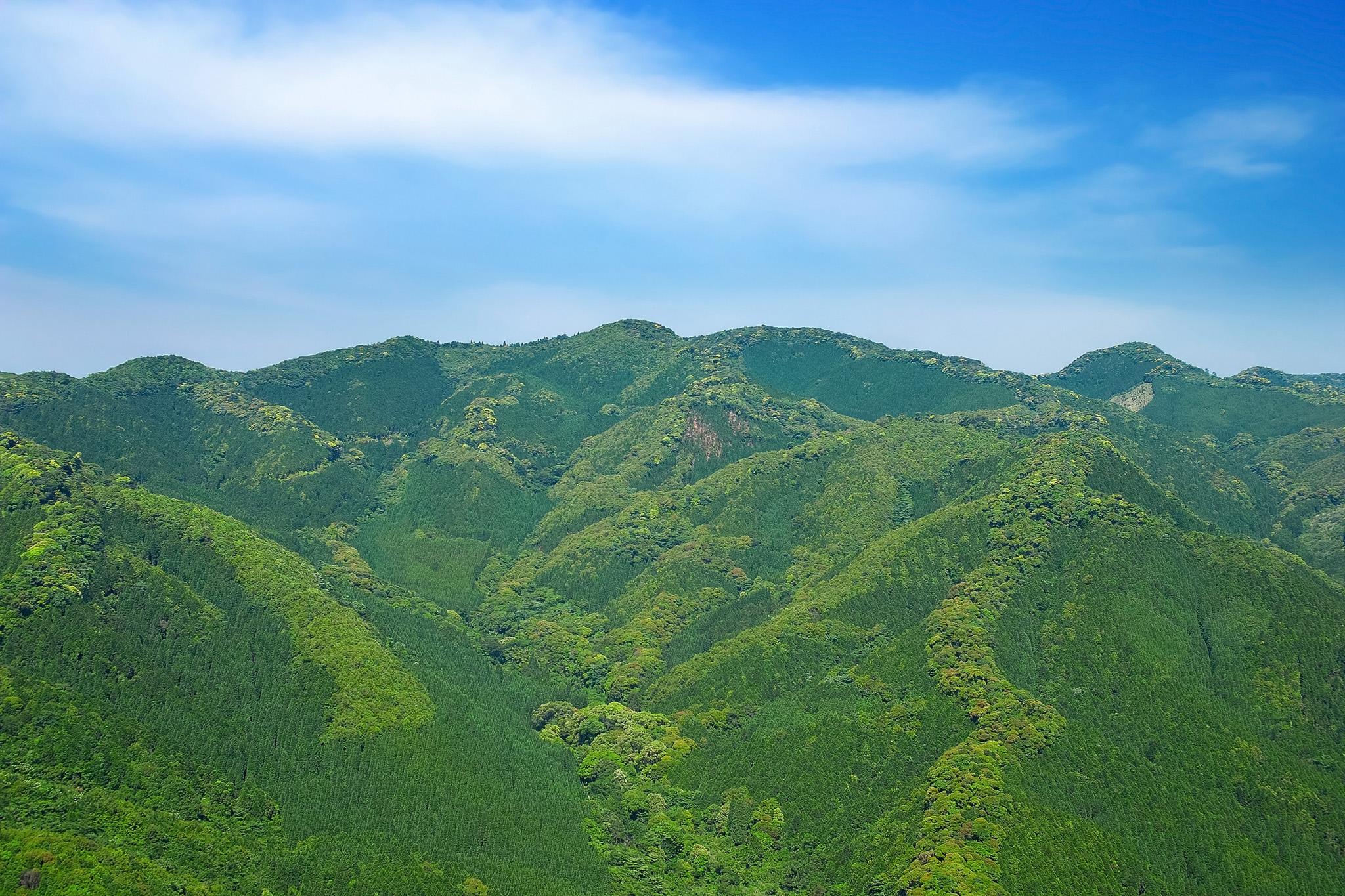 「木々の命みなぎる若草色の山」の画像を無料ダウンロード