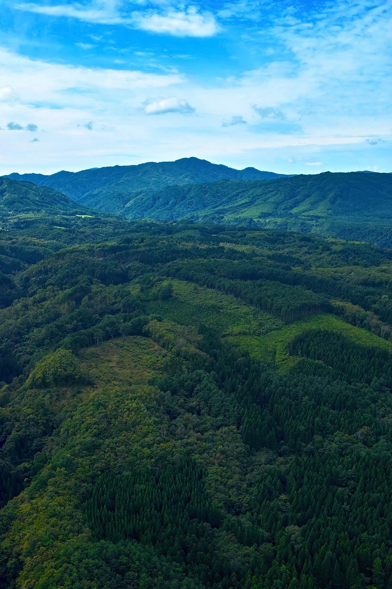 「緑の木々が連なる山並み」