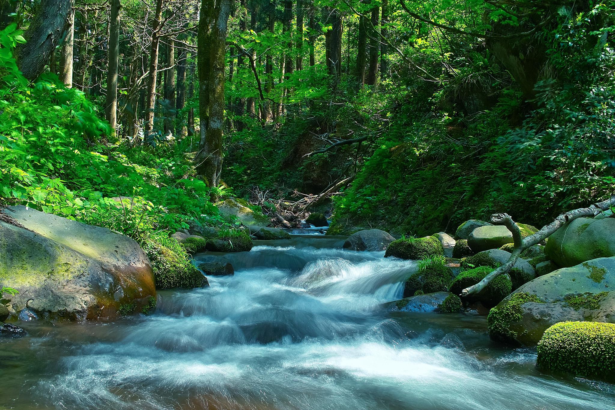 緑の森の中を流れる清流の写真
