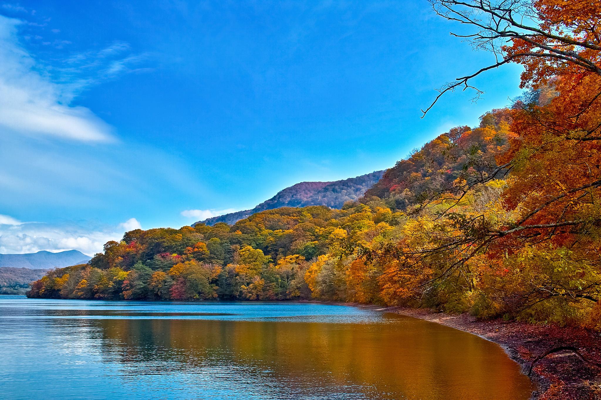美しく紅葉する湖岸