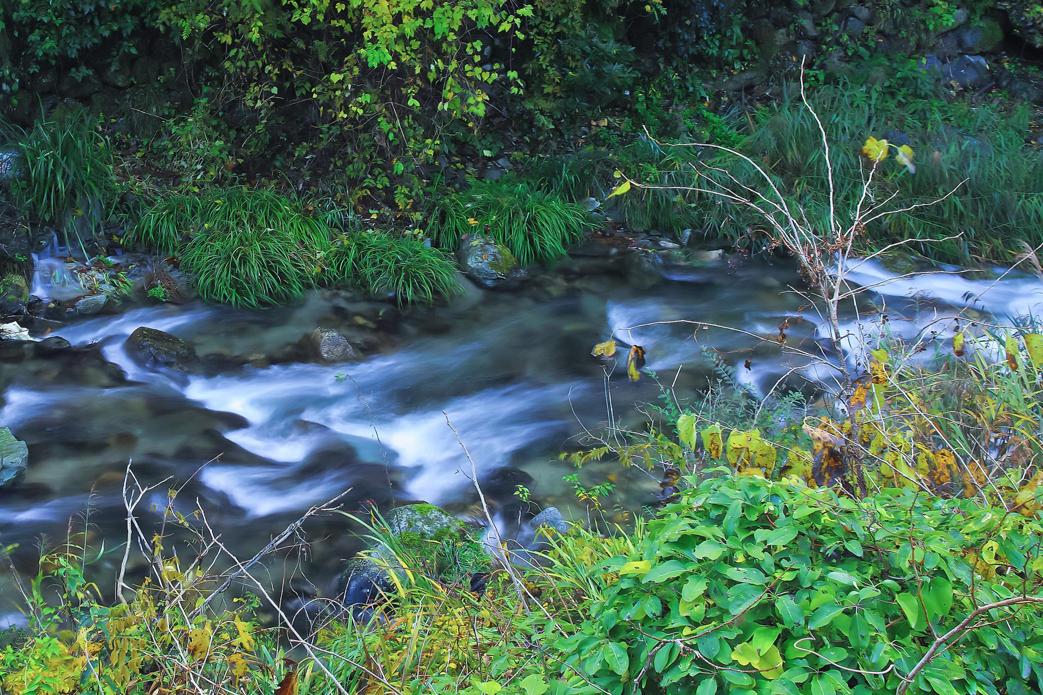 「綺麗な水が流れる小川」の画像を無料ダウンロード