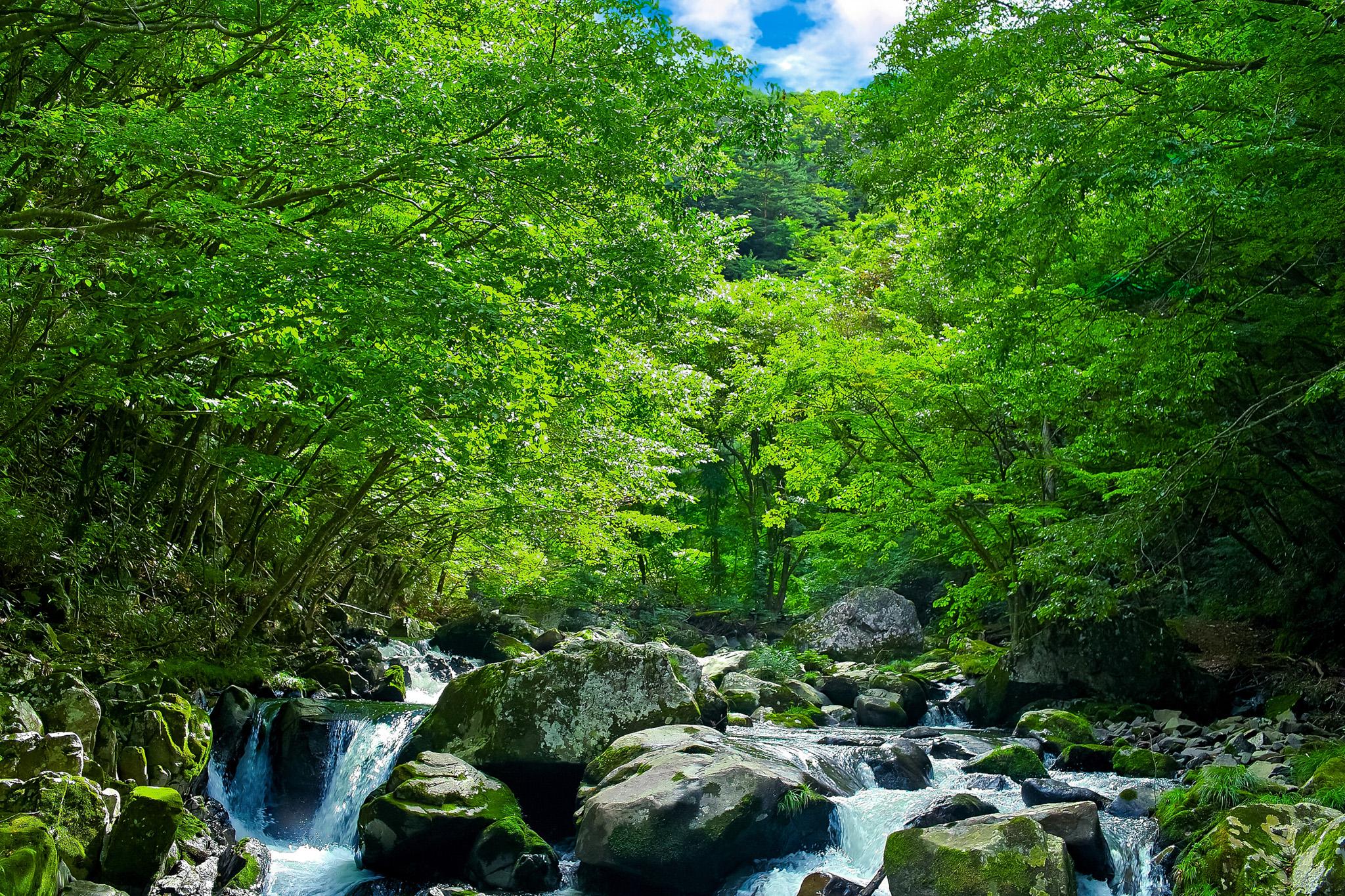 緑あふれる林の中を流れる夏の清流