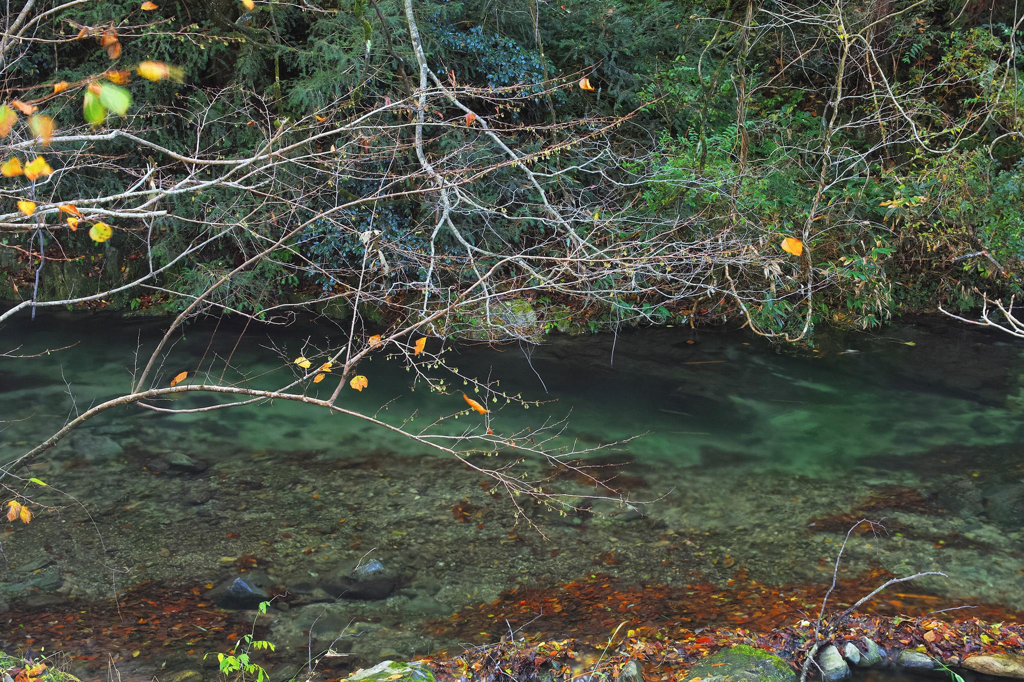 「透明な水と落葉積もる川瀬」