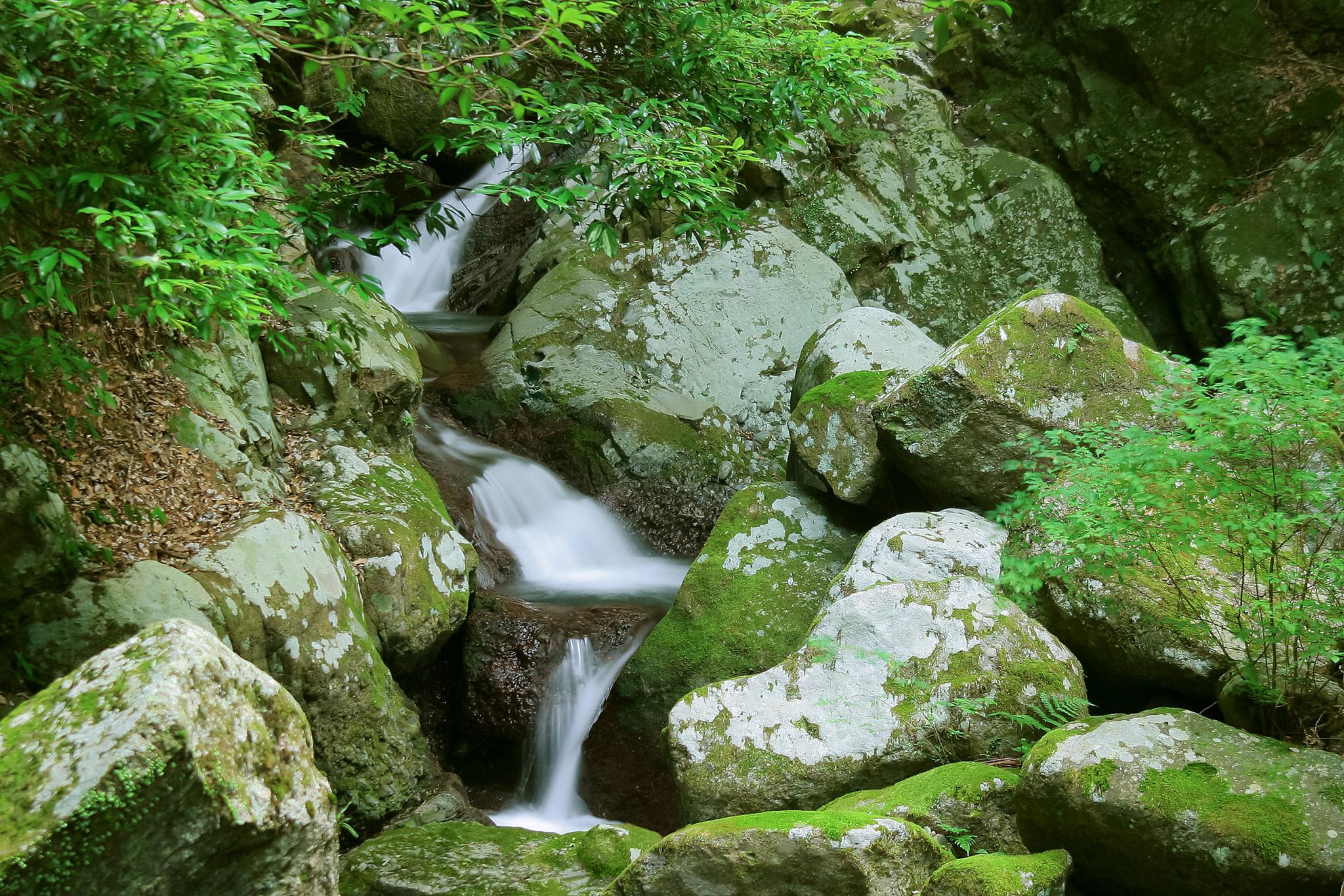 「川の源流近くの小さな滝」