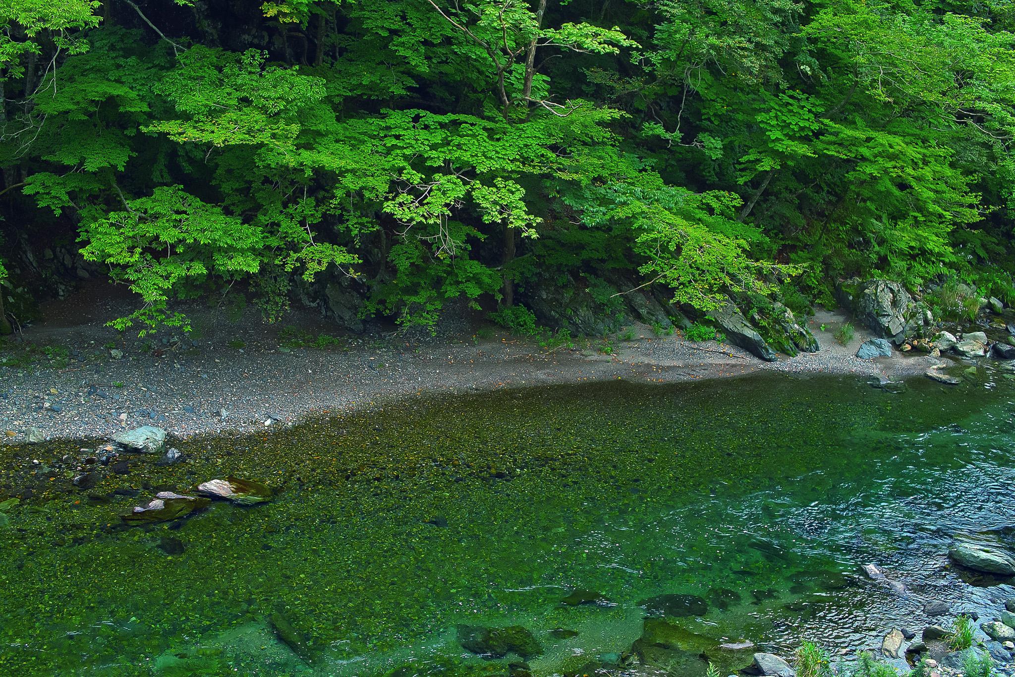 「緑濃き穏やか川瀬」の画像を無料ダウンロード