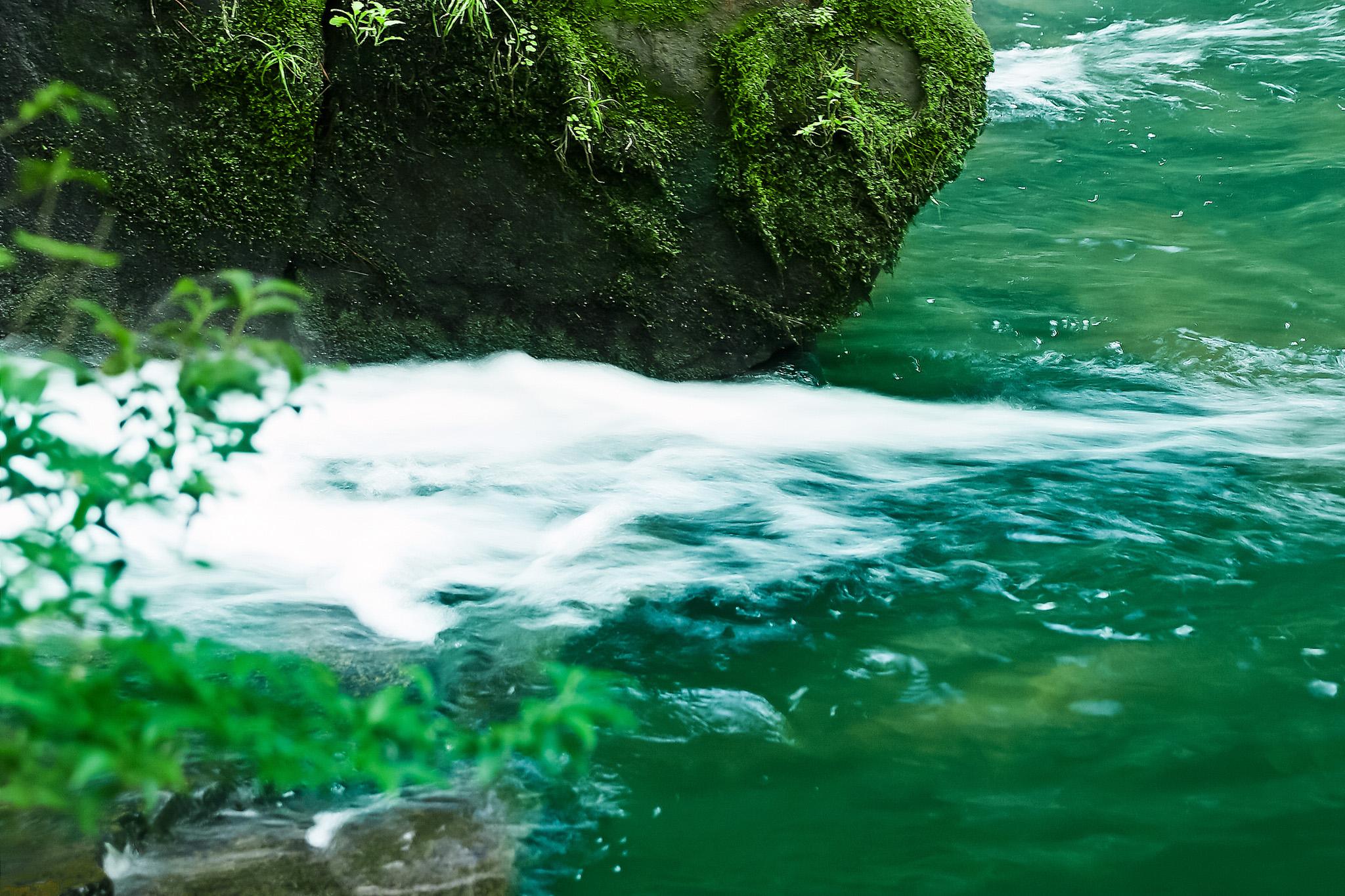 「川縁に緑の葉が揺れる」
