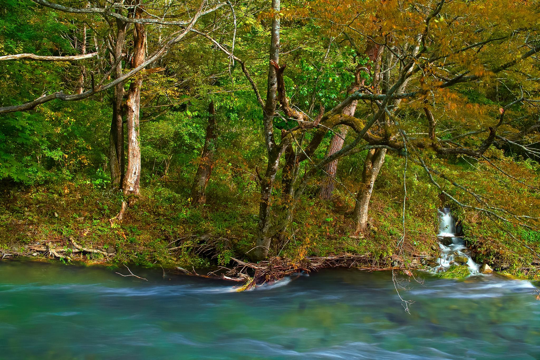山水が流れ込む秋の清流