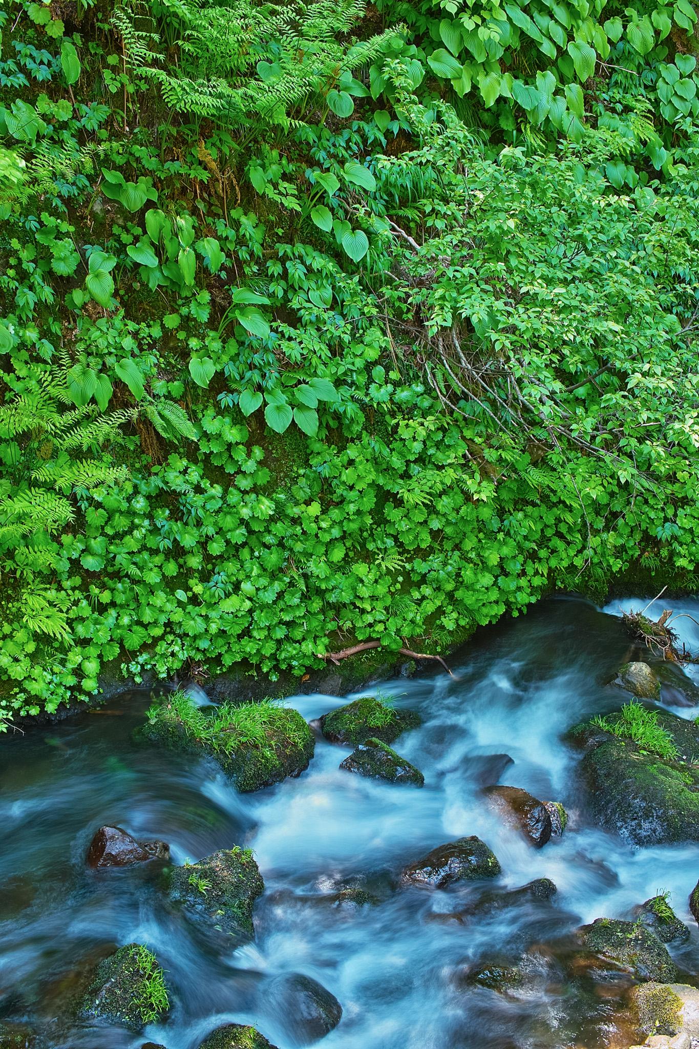 「川と渓流」のテクスチャを無料ダウンロード