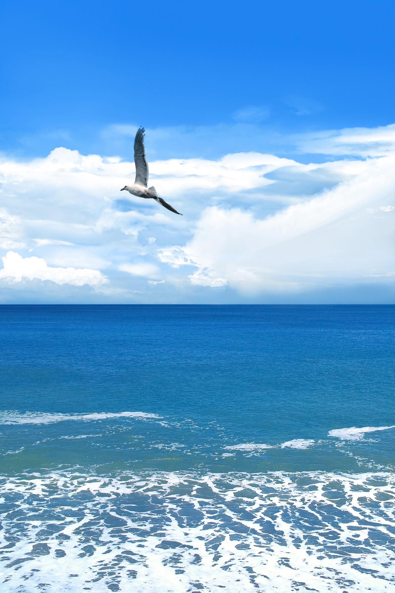 「カモメと真夏の海」