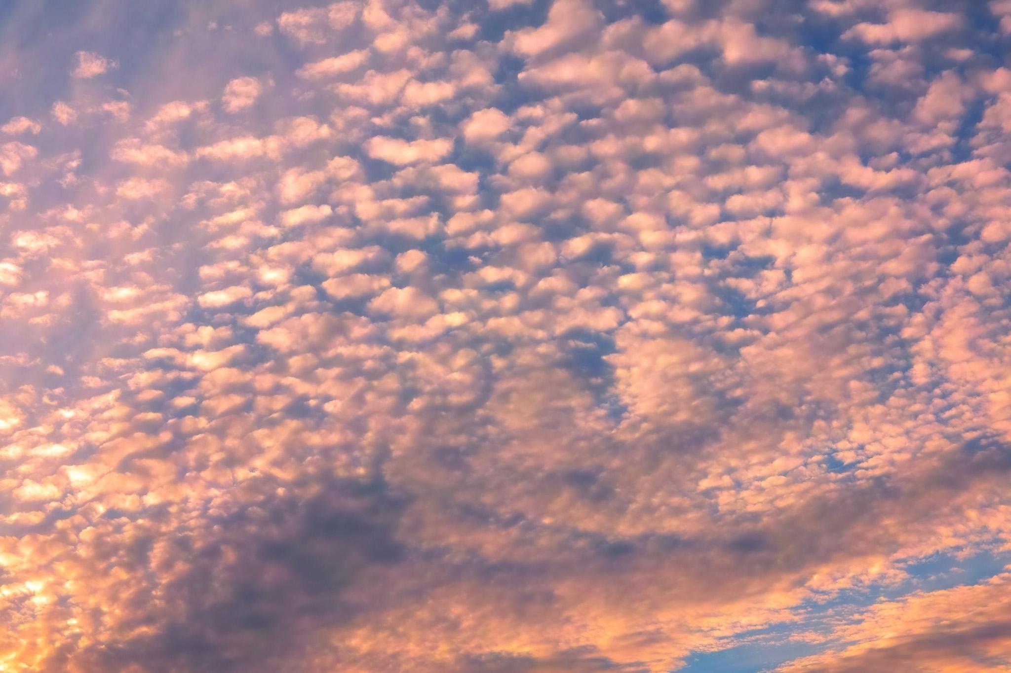 「薄紅の鱗雲が覆う夕焼け空」