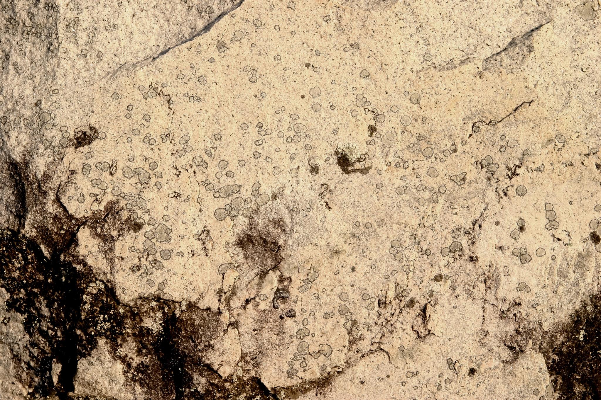 「シミの様な模様の入った岩肌」