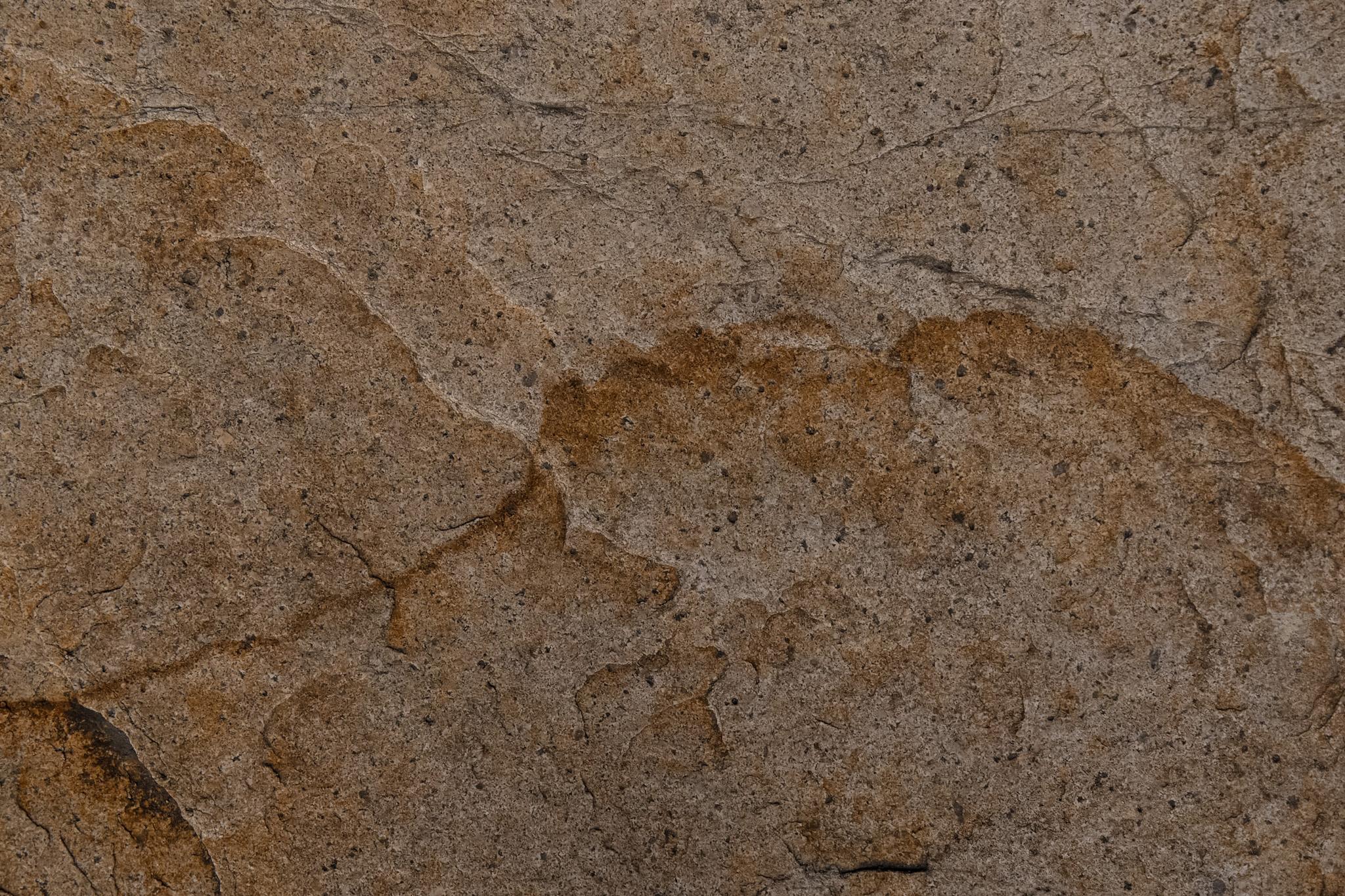 「茶色い砂岩のテクスチャ」