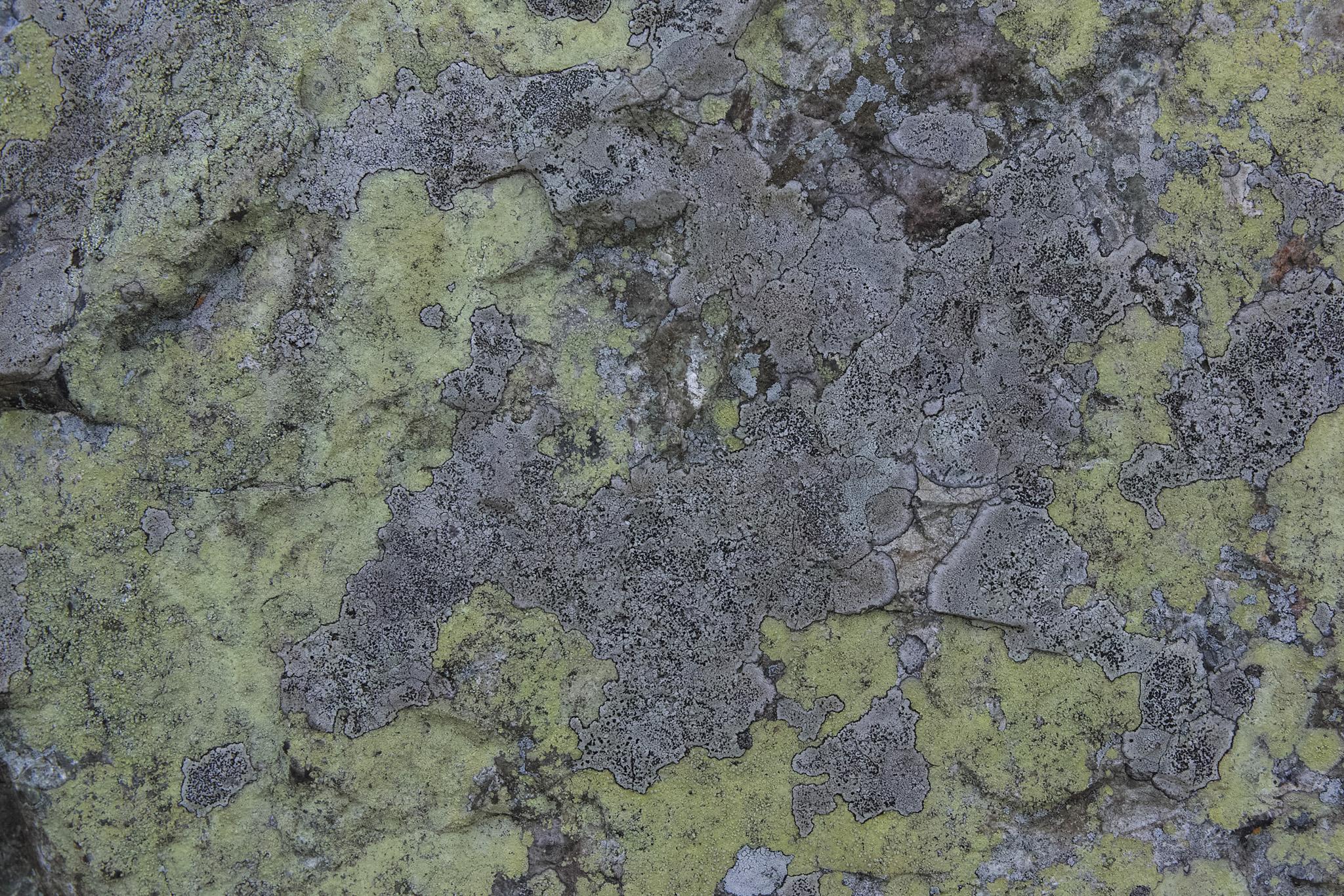 「有機的模様の石の背景」のテクスチャを無料ダウンロード