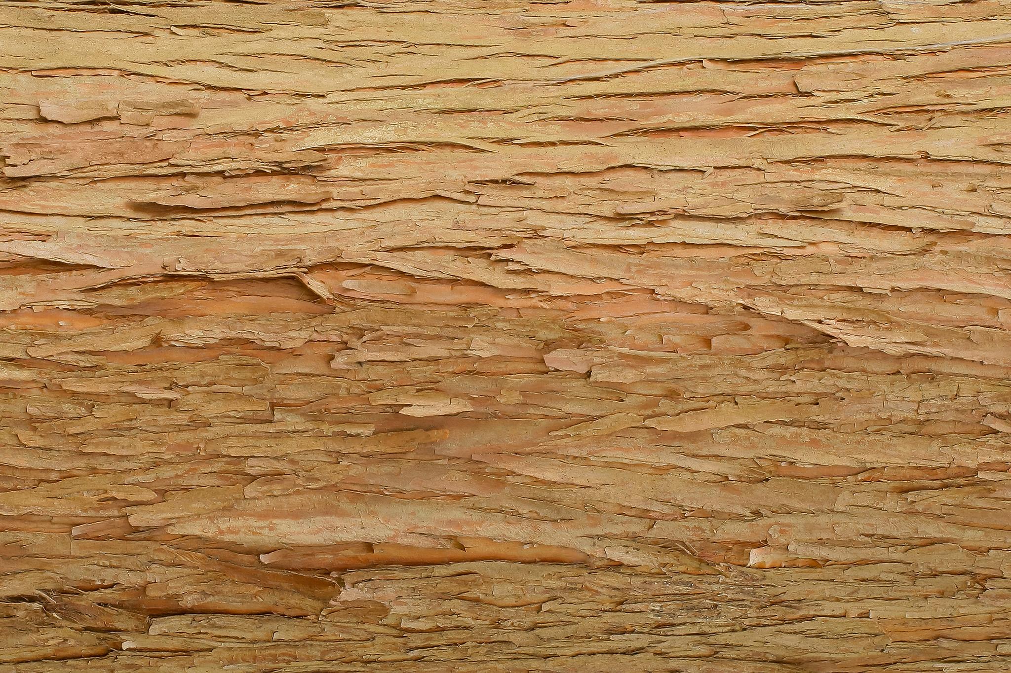 「若い木の樹皮のテクスチャ」