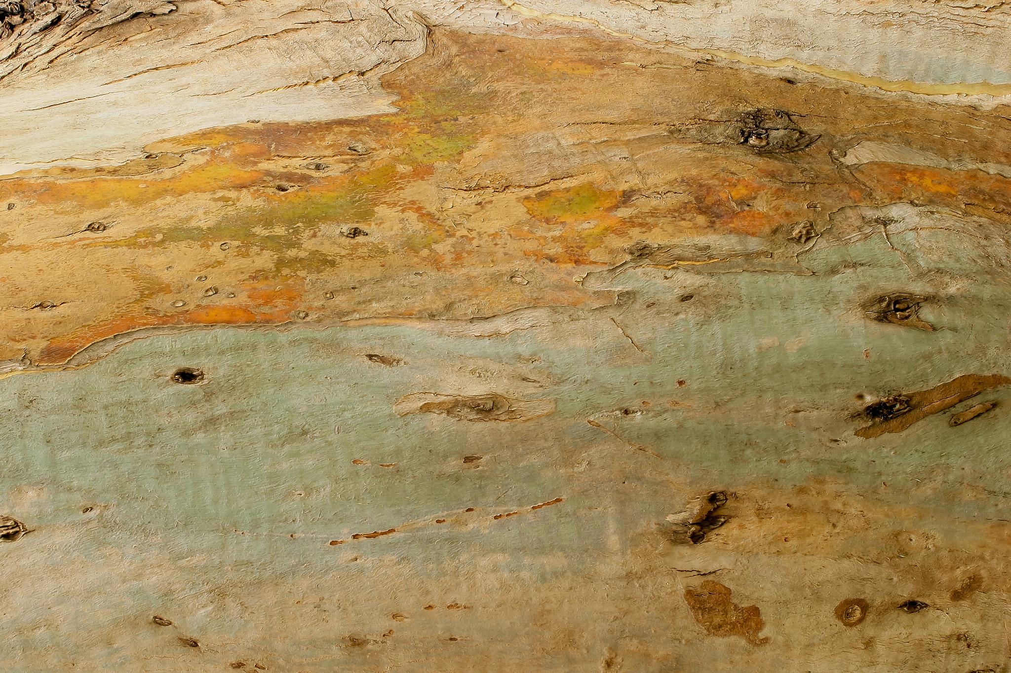 「樹皮を剥がされた木」