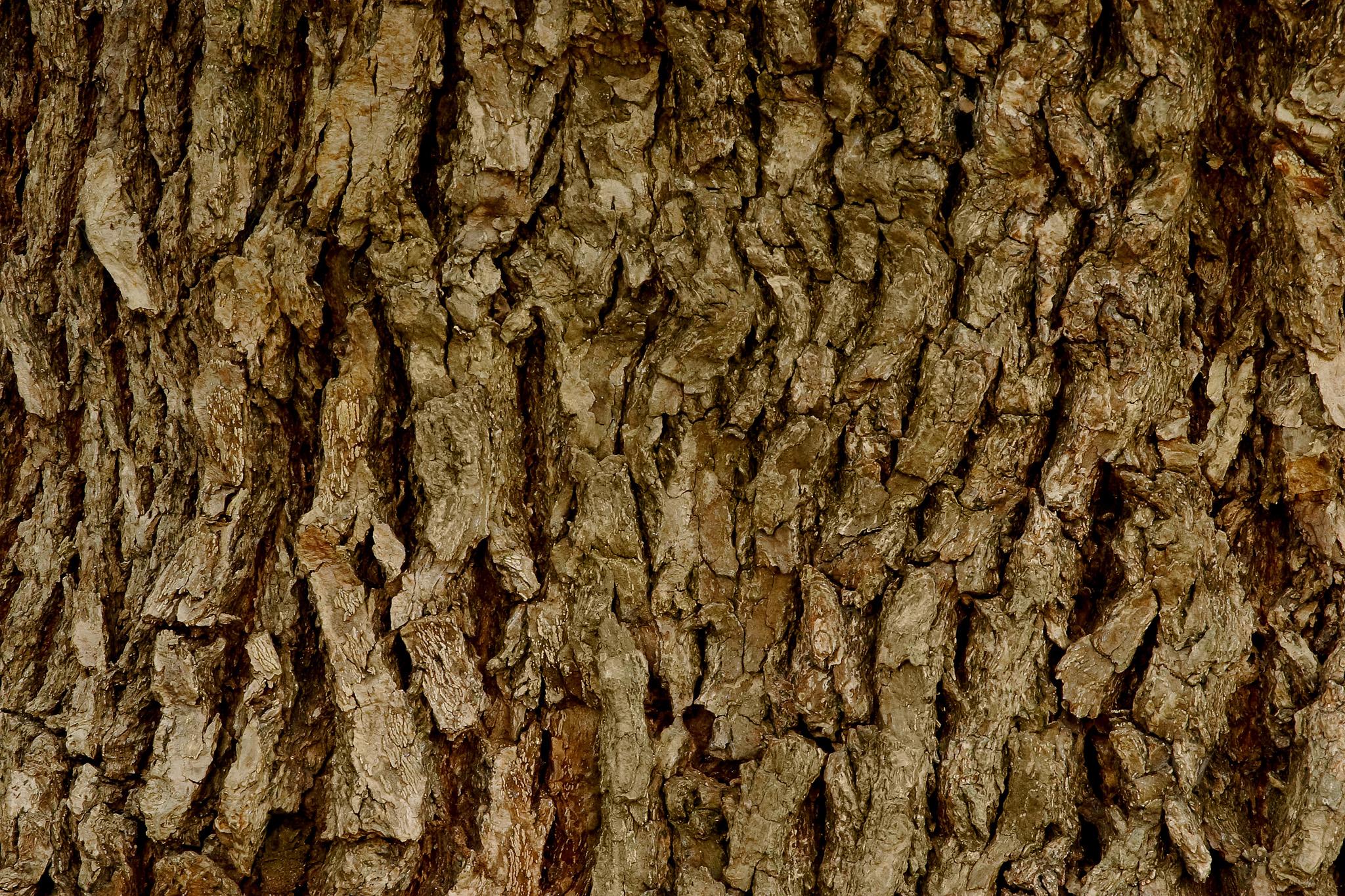 「老木の樹皮のテクスチャ」