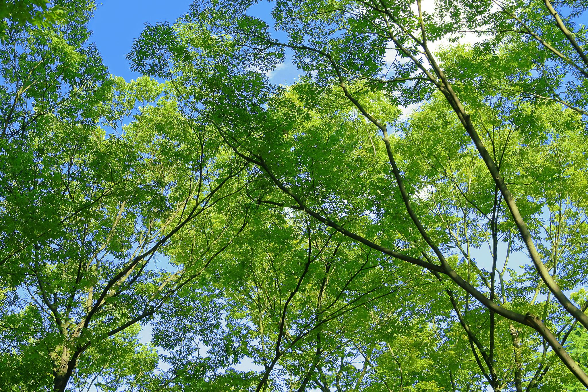 「新緑が美しい林」