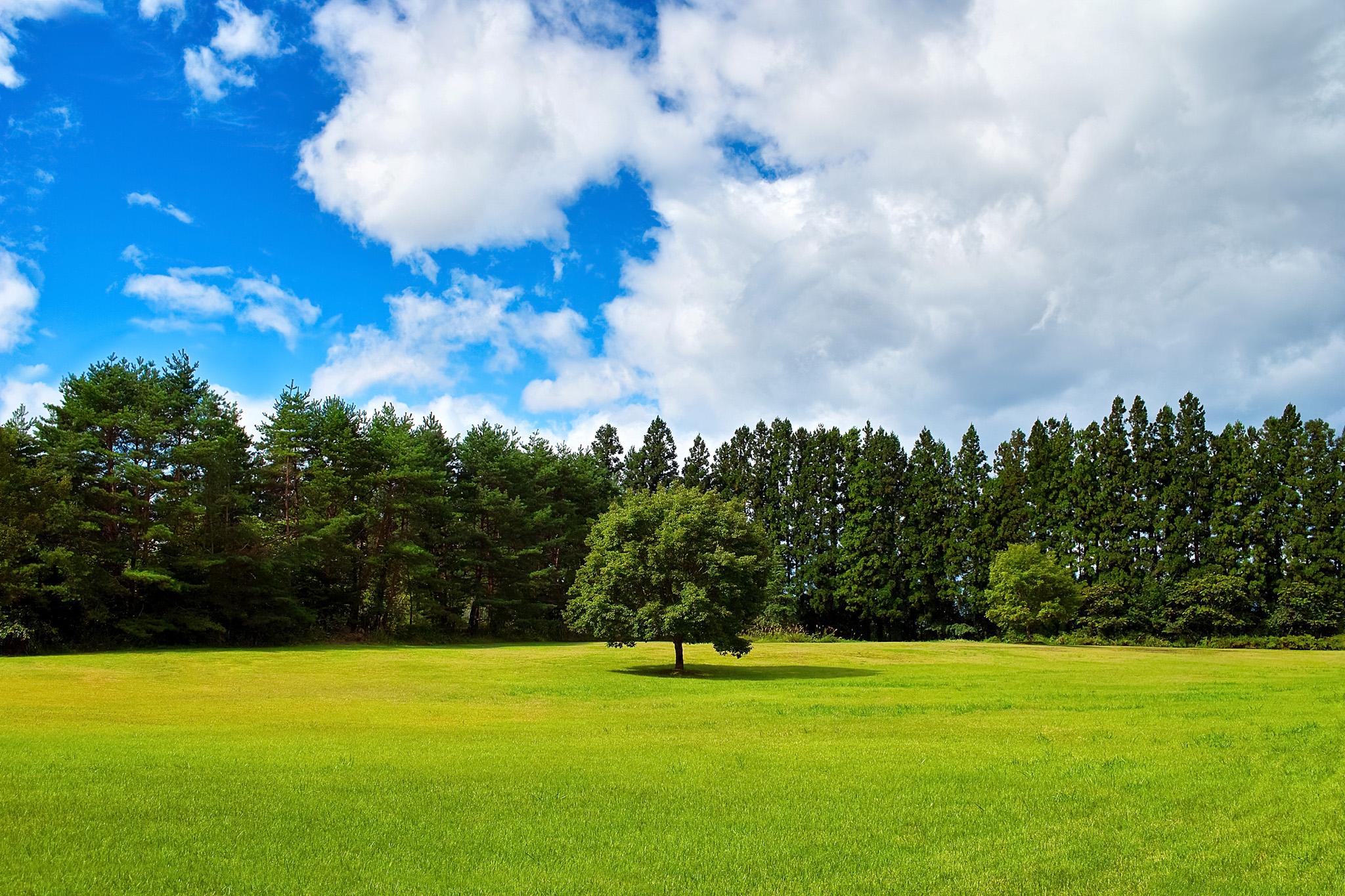 「緑の草原に立つ一本の木」の素材を無料ダウンロード